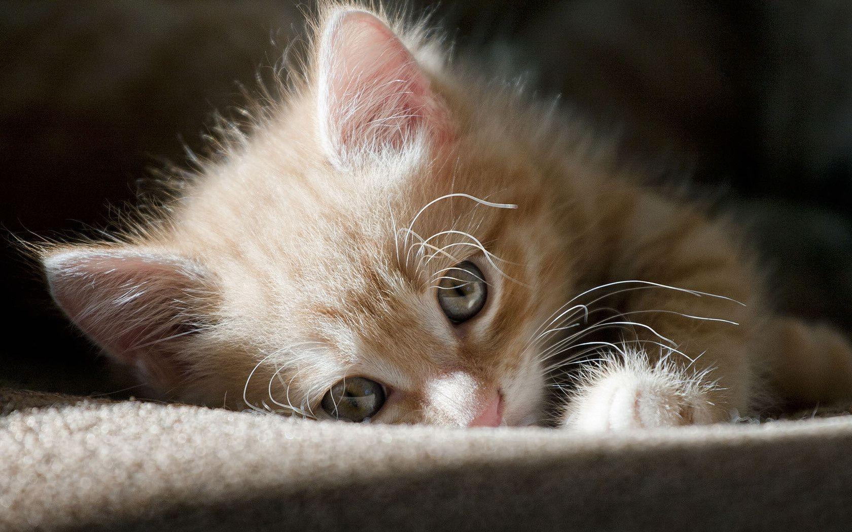 Картинки скучаю котята