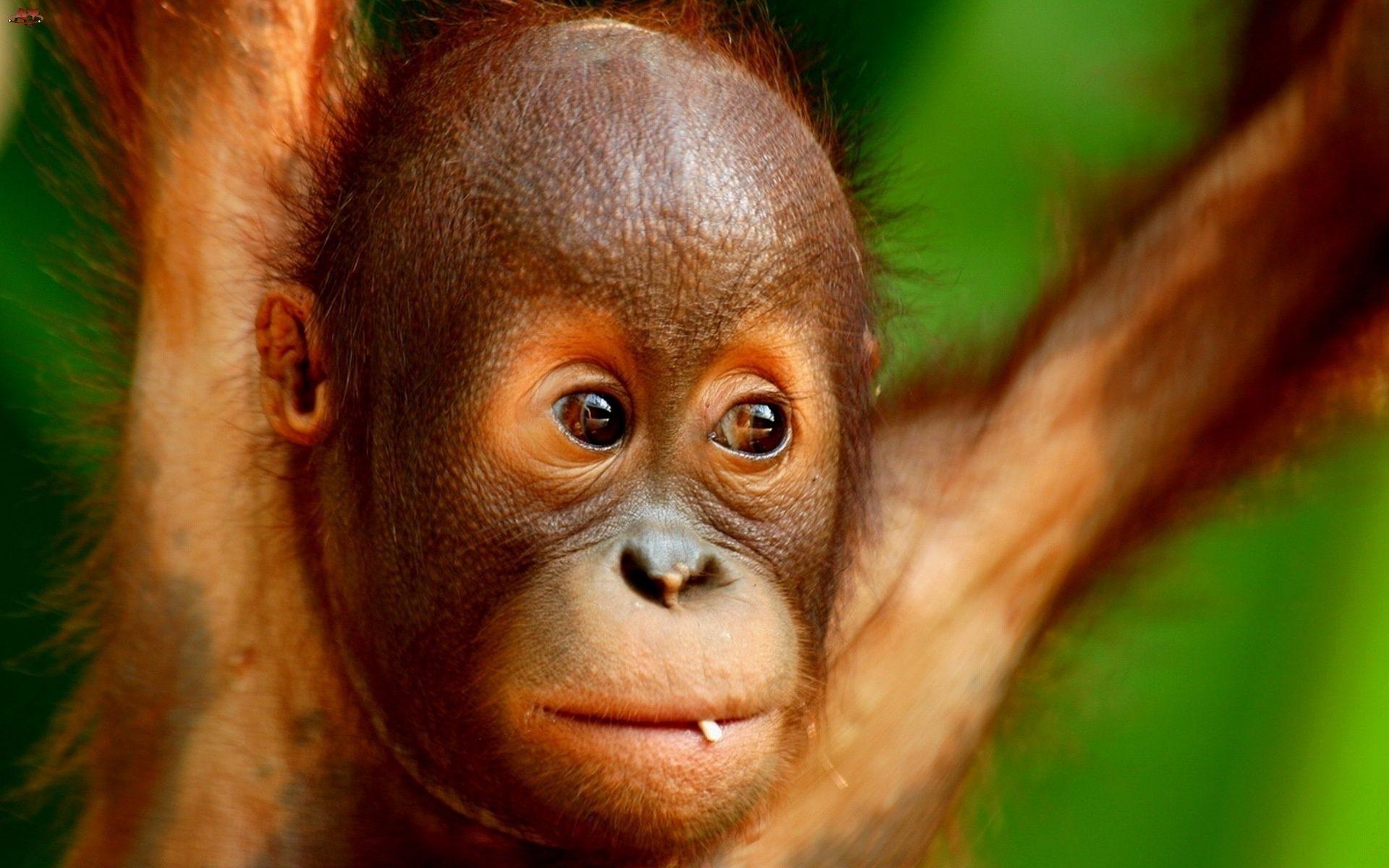 Фон, прикольные картинки на аву обезьяны