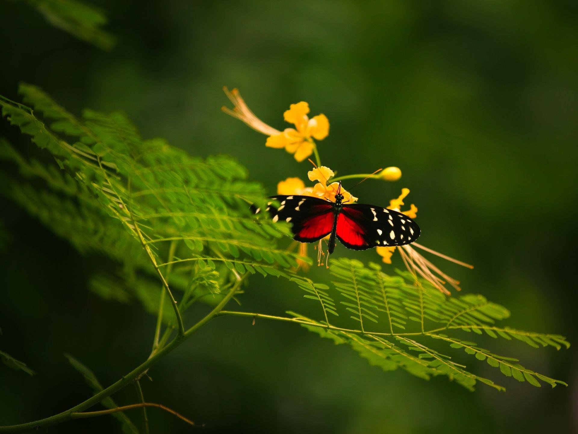Бабочка фото крупным планом