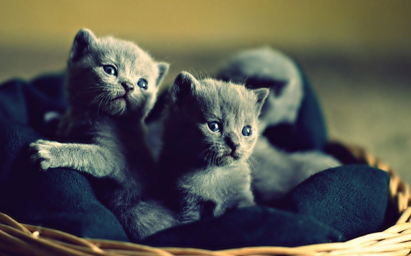 Картинки с котятами обои на телефон