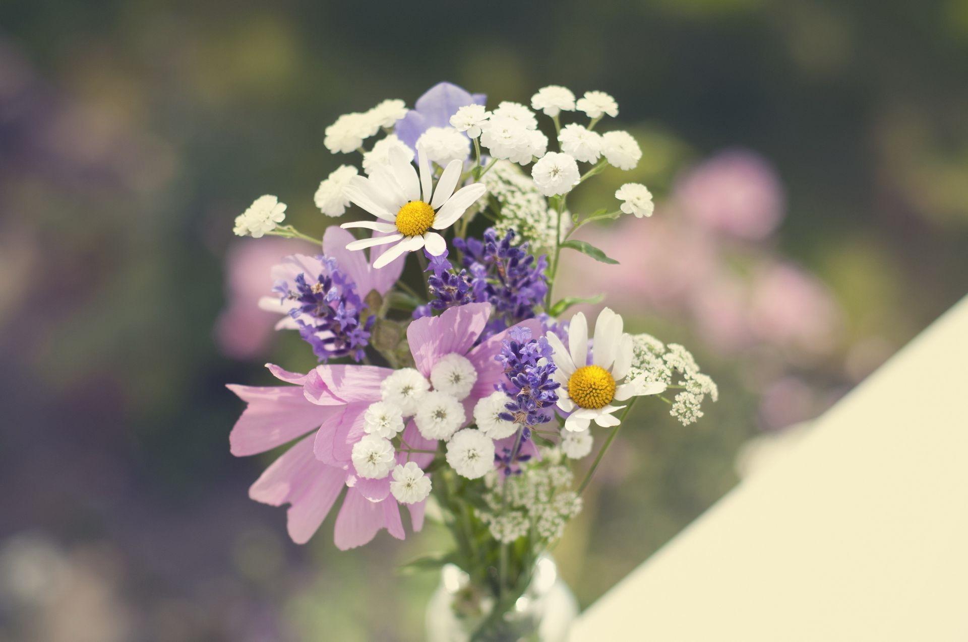 Ромашка полевые цветы букет скачать