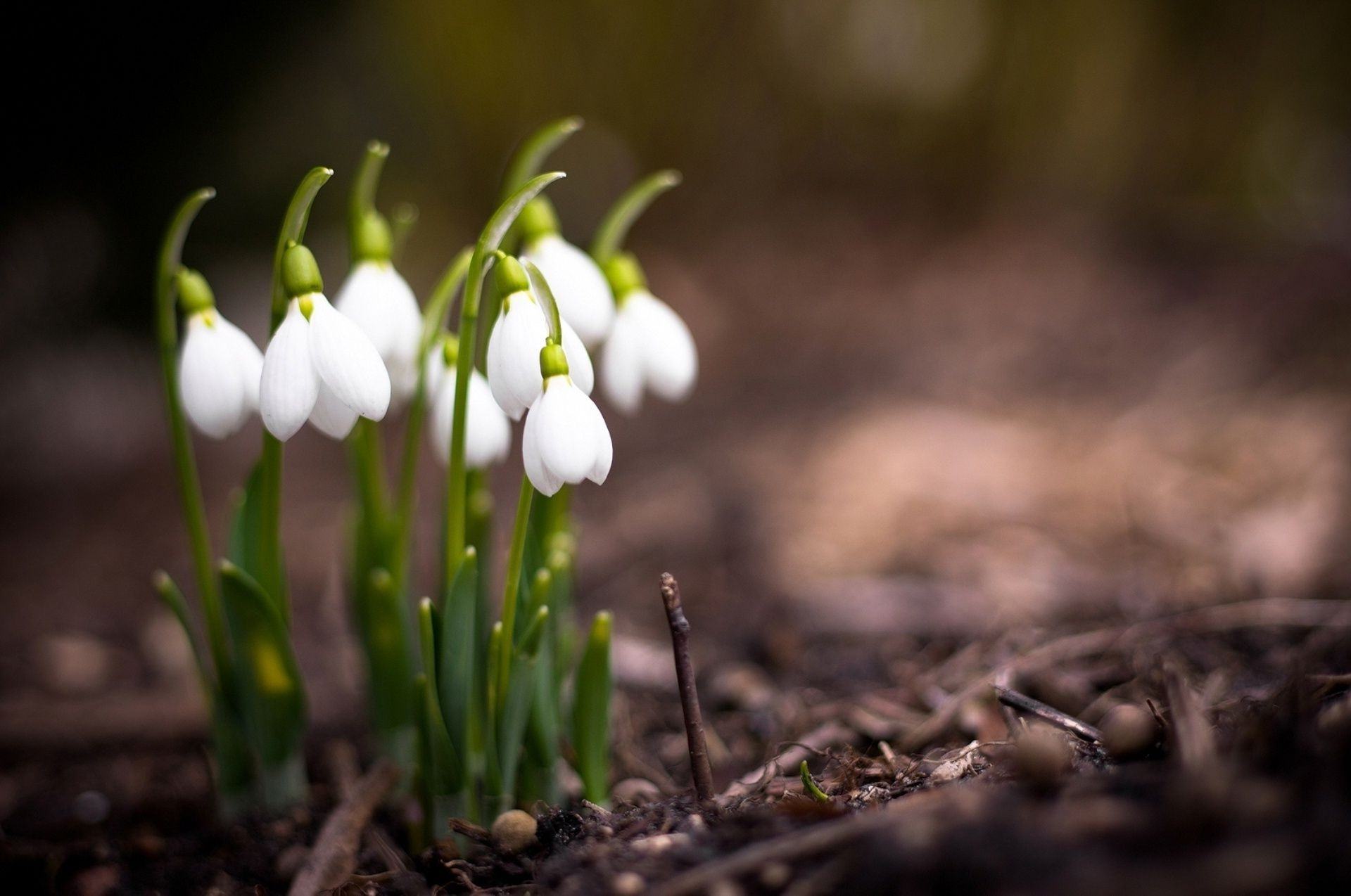 Анимации, картинки о природе весна красивые