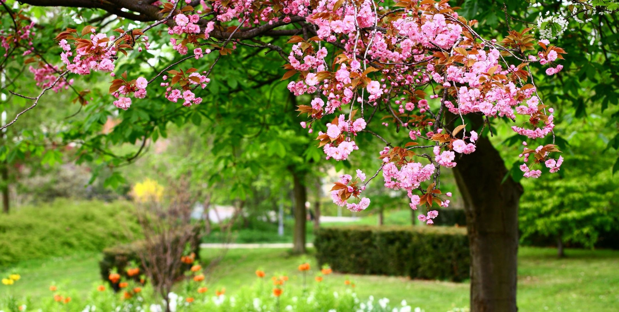 цветущие деревья во дворе  № 532016 загрузить