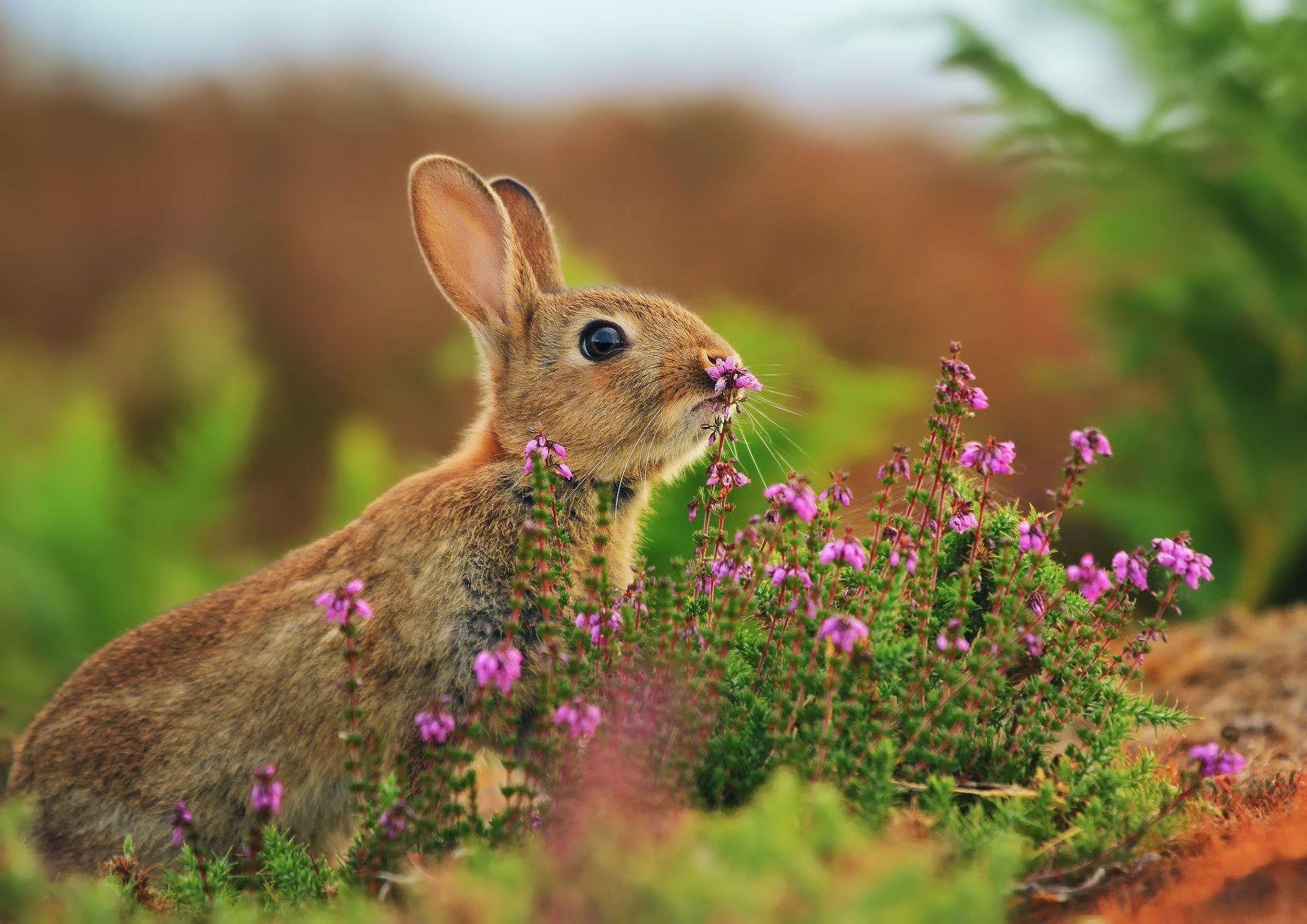Красивые картинки с природой и животными