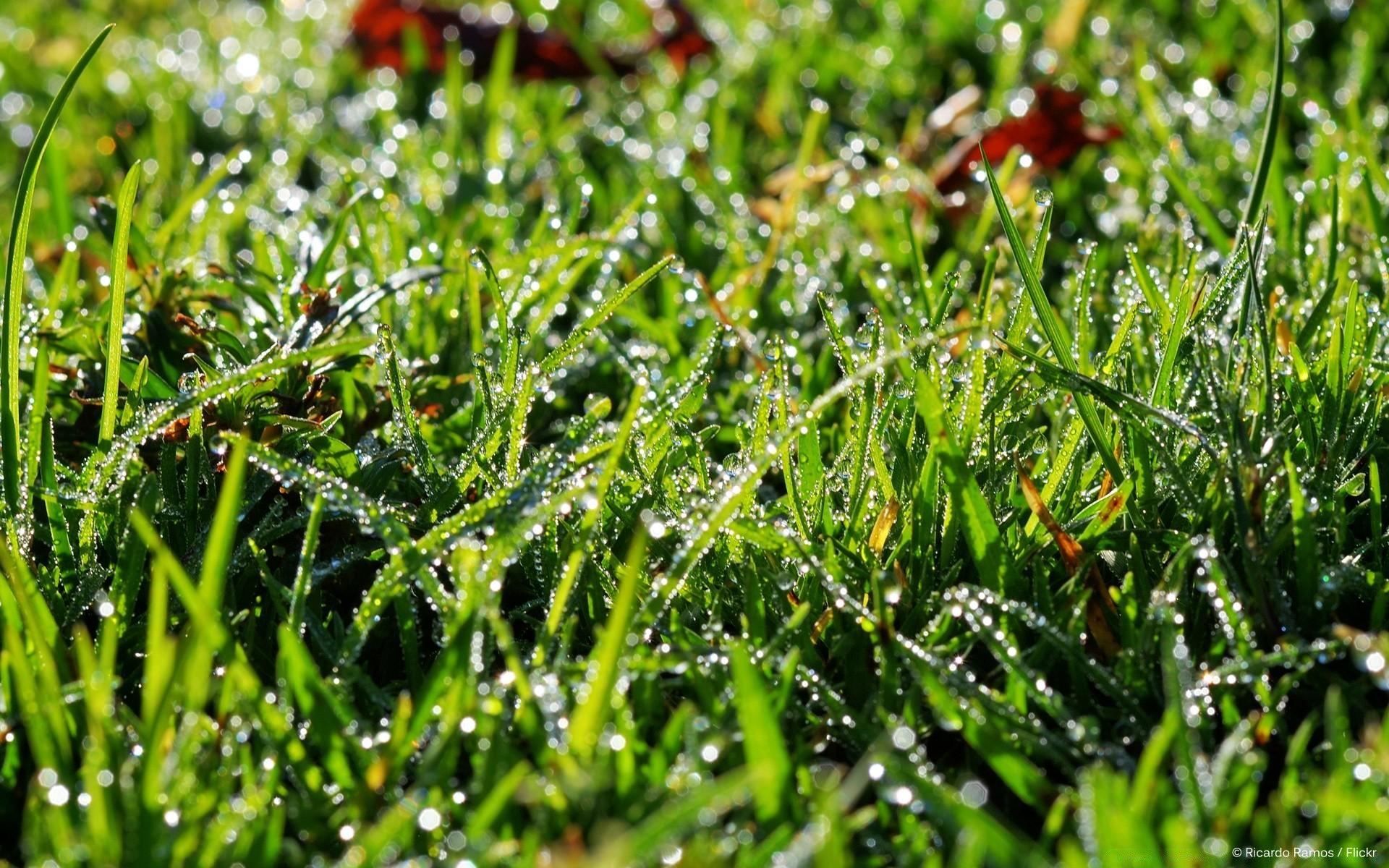 Трава макро съемка  № 3147973 бесплатно