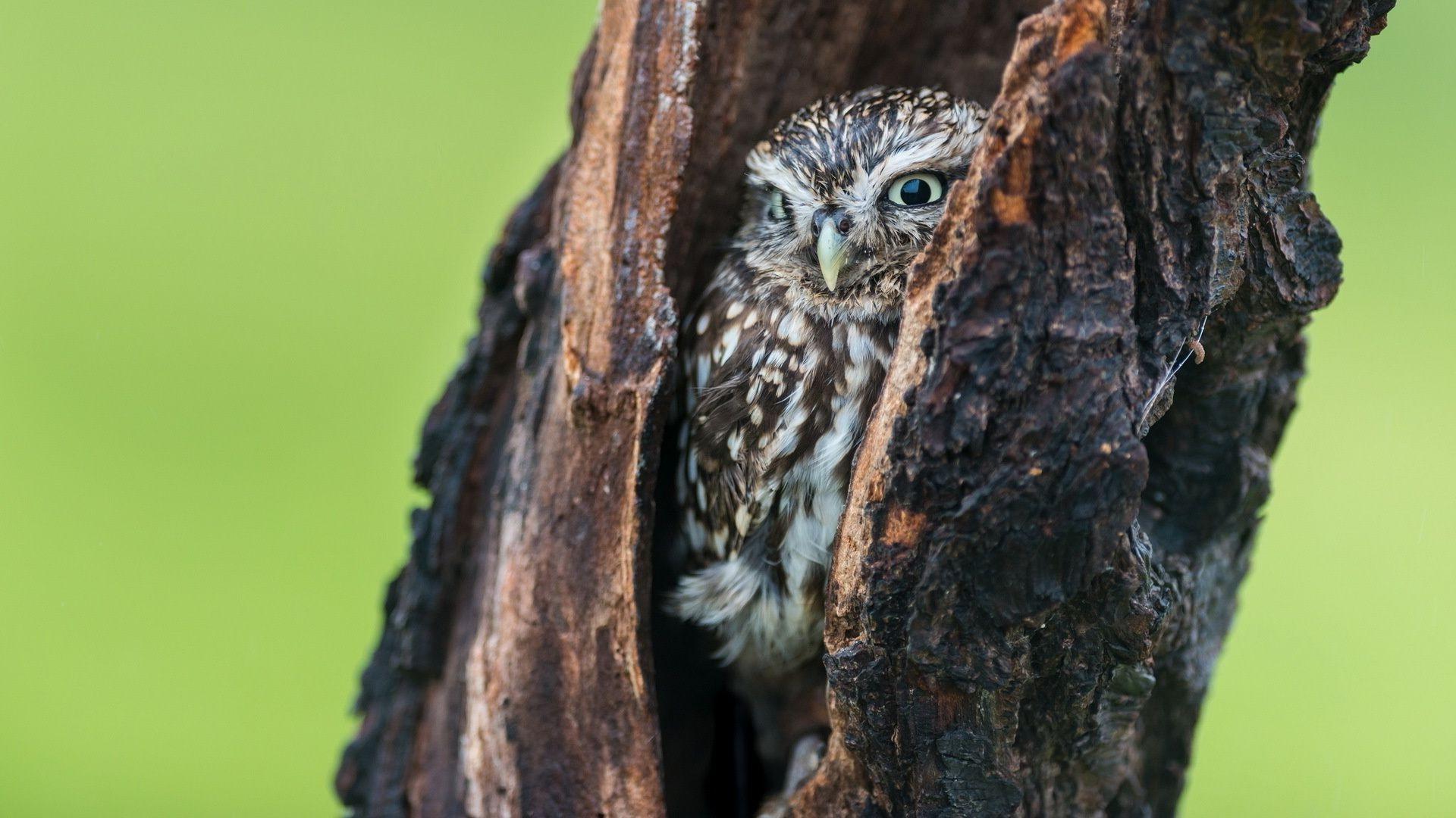 совы птицы дерево животные природа онлайн