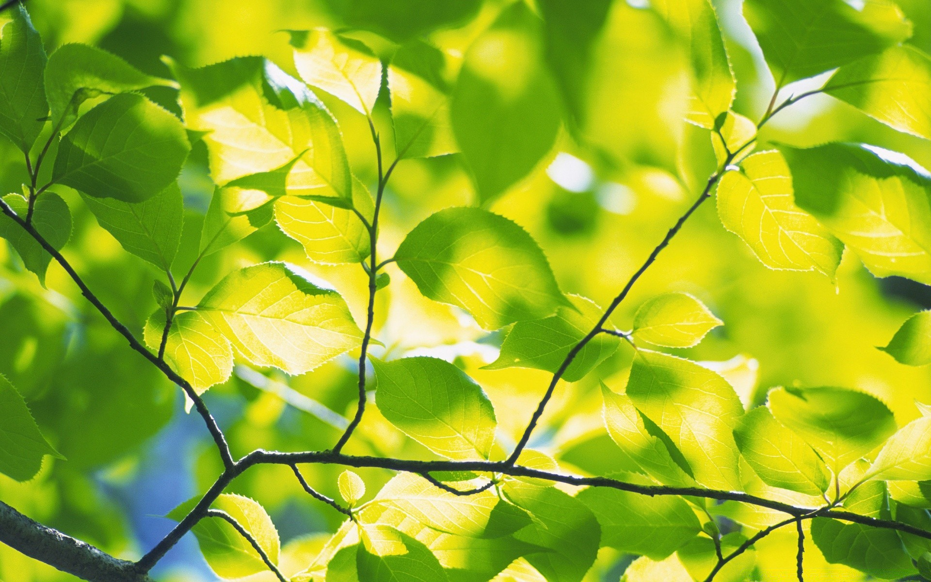 ветка с листьями  № 3792348 загрузить