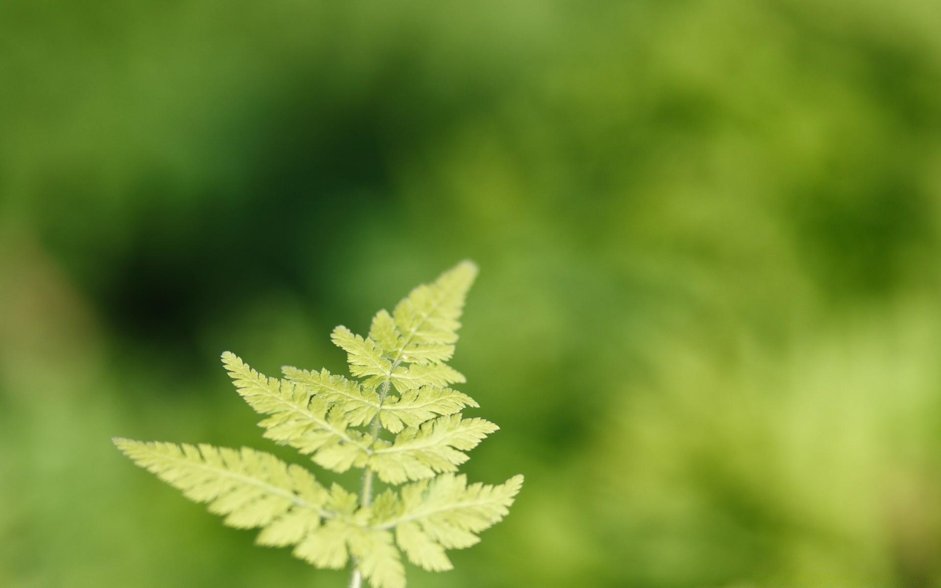 природа Папоротник листья скачать