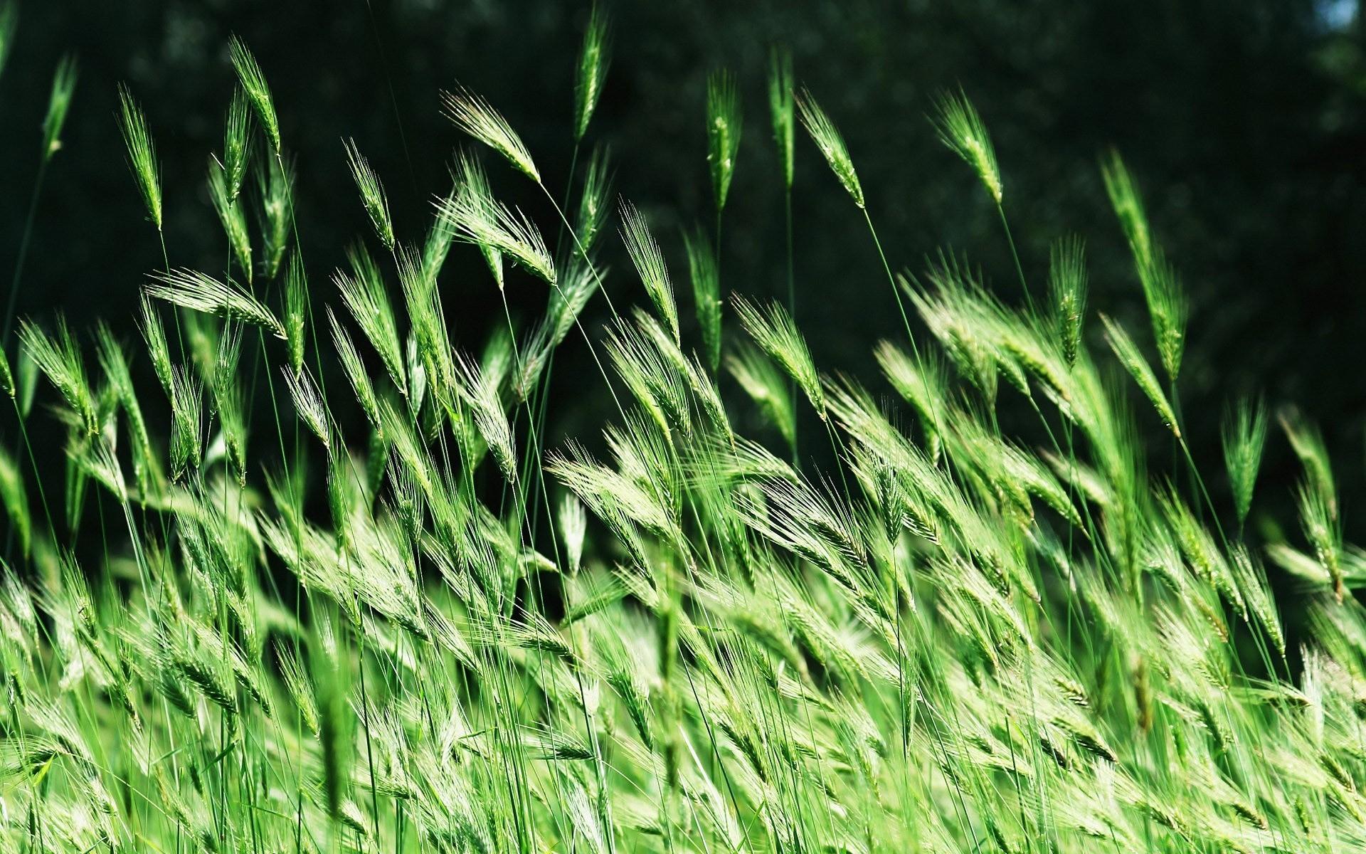 Картинка анимация трава, картинка спасибо