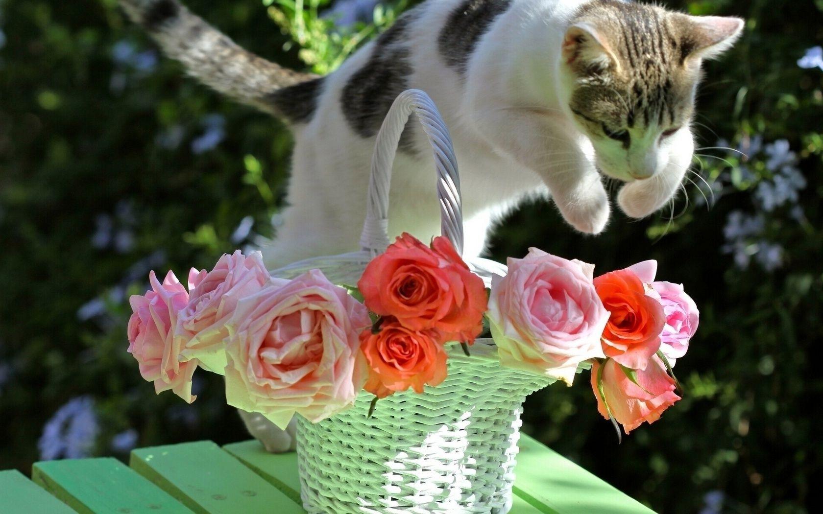 Красивые открытки котики и розы, день россии смешные