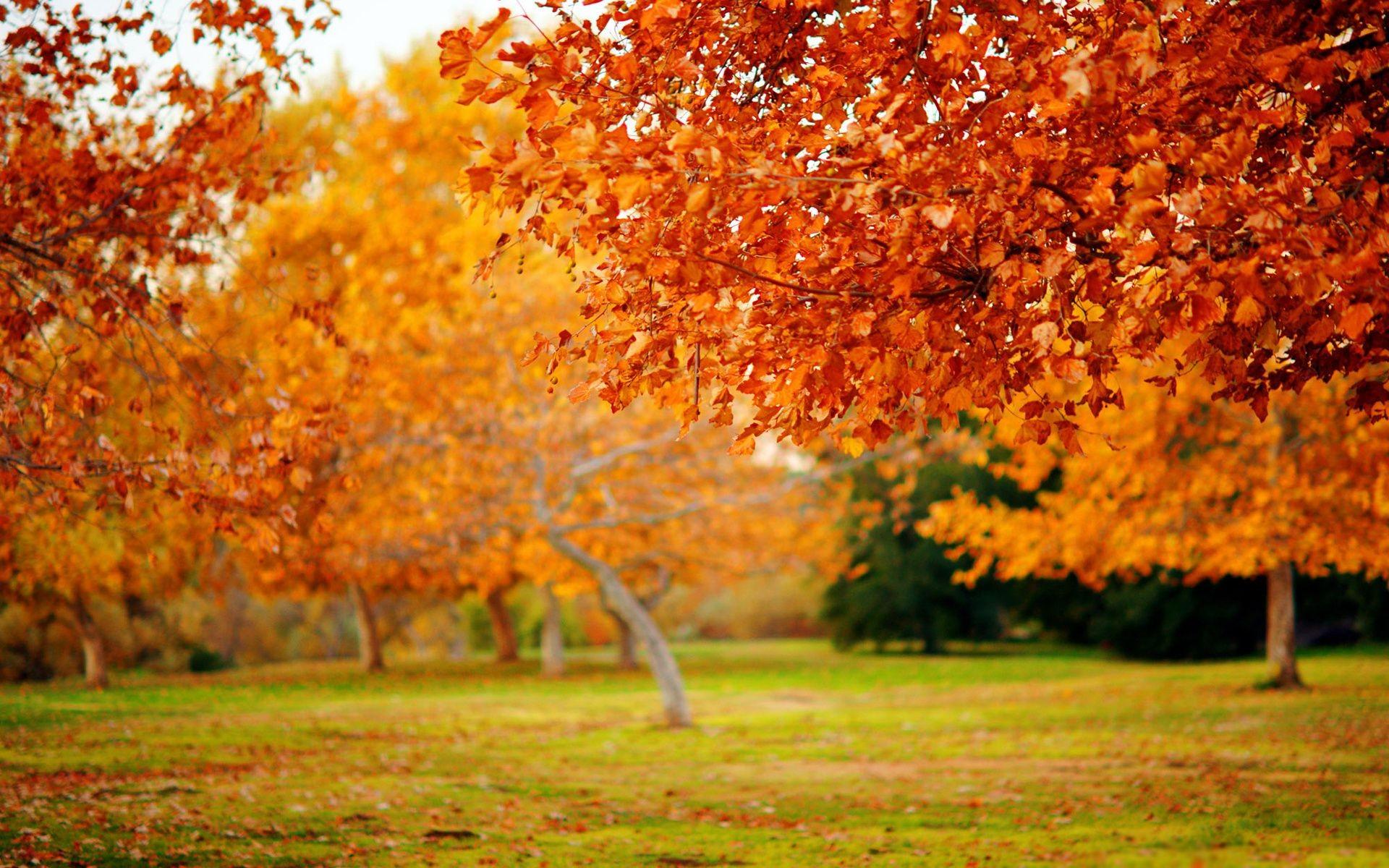 Фоновая картинка осень на рабочий стол