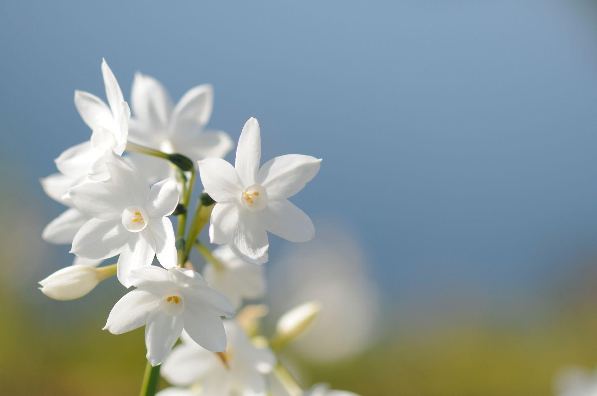 Белый цветок открытка, открытки вырезки бумаги