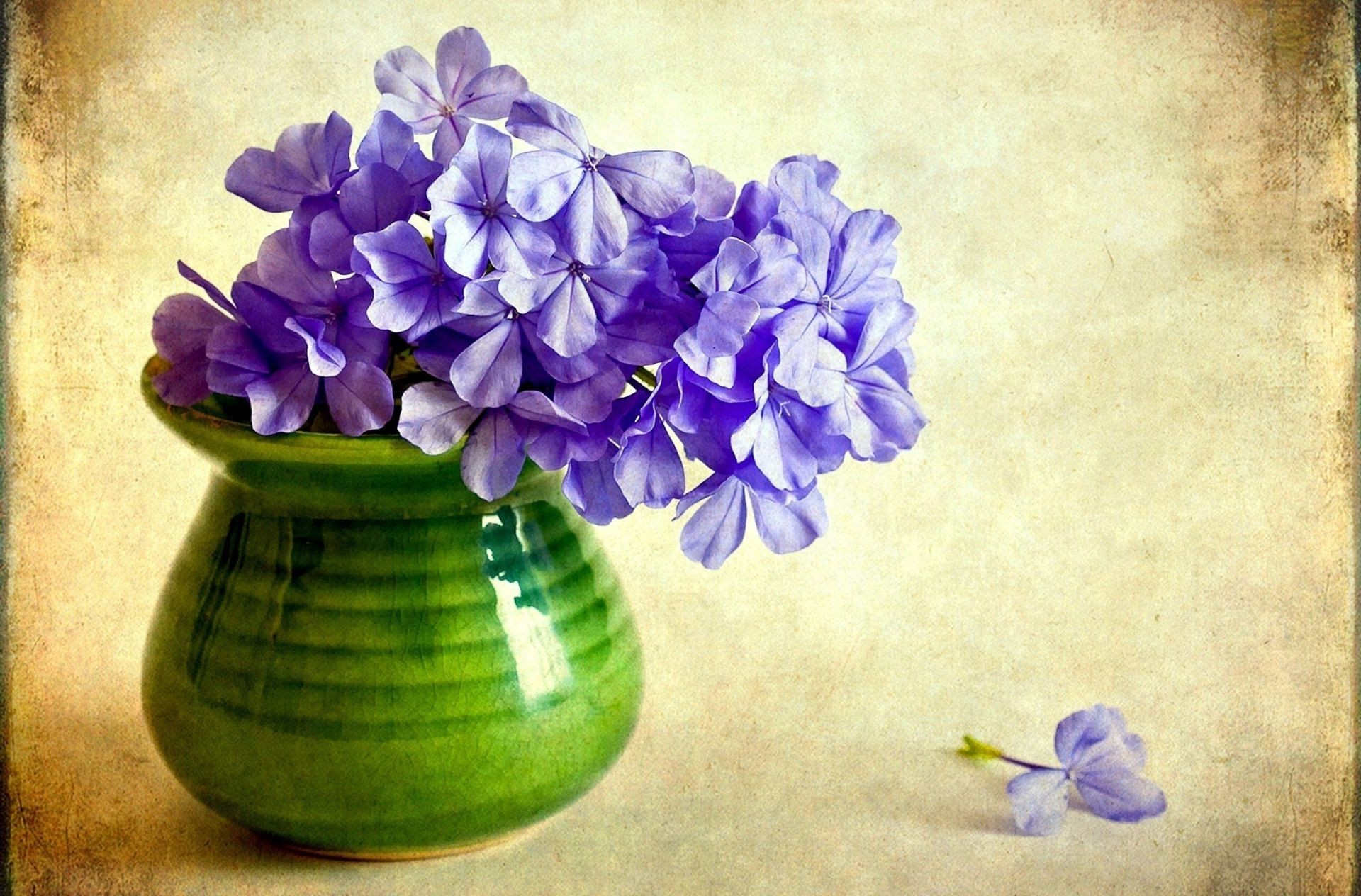 Цветки в вазах скачать