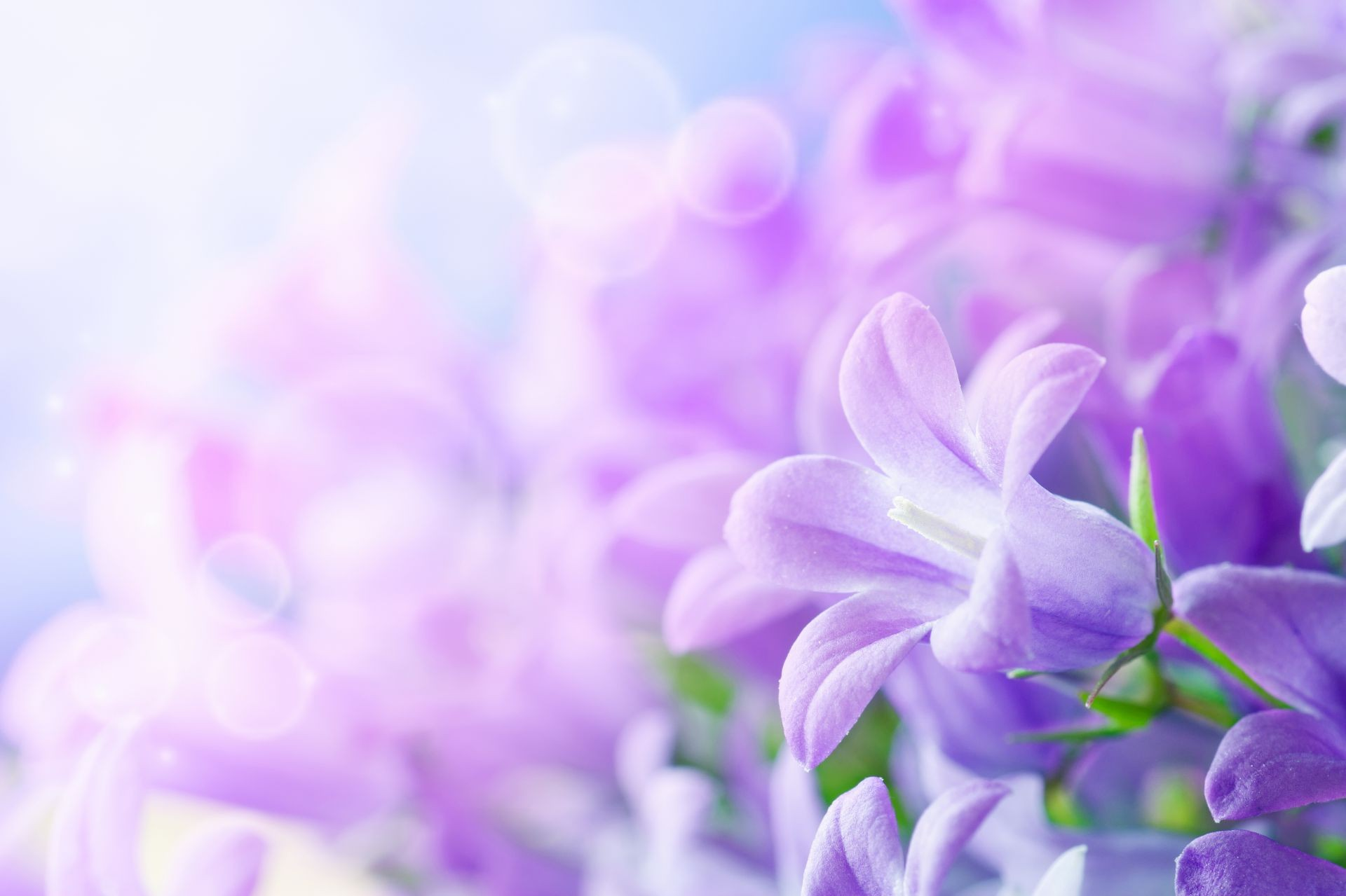 фото красивые обои цветы