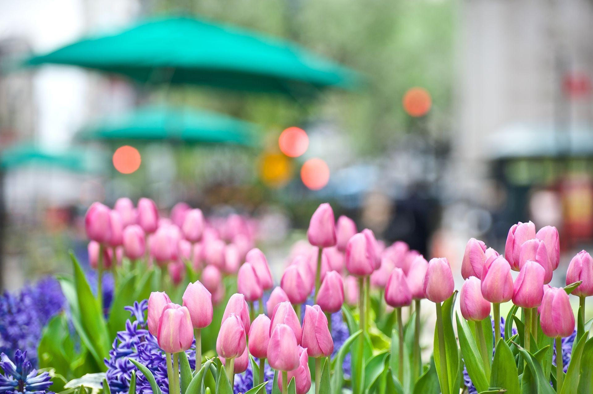 картинки весна обои на телефон может разбиться при