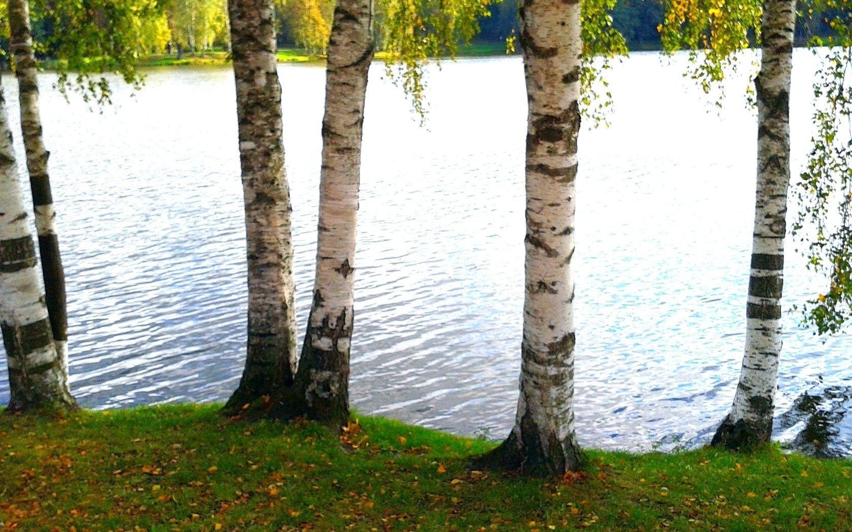 мечтает дать фон для фото речка лес березы киркорова отметили, что
