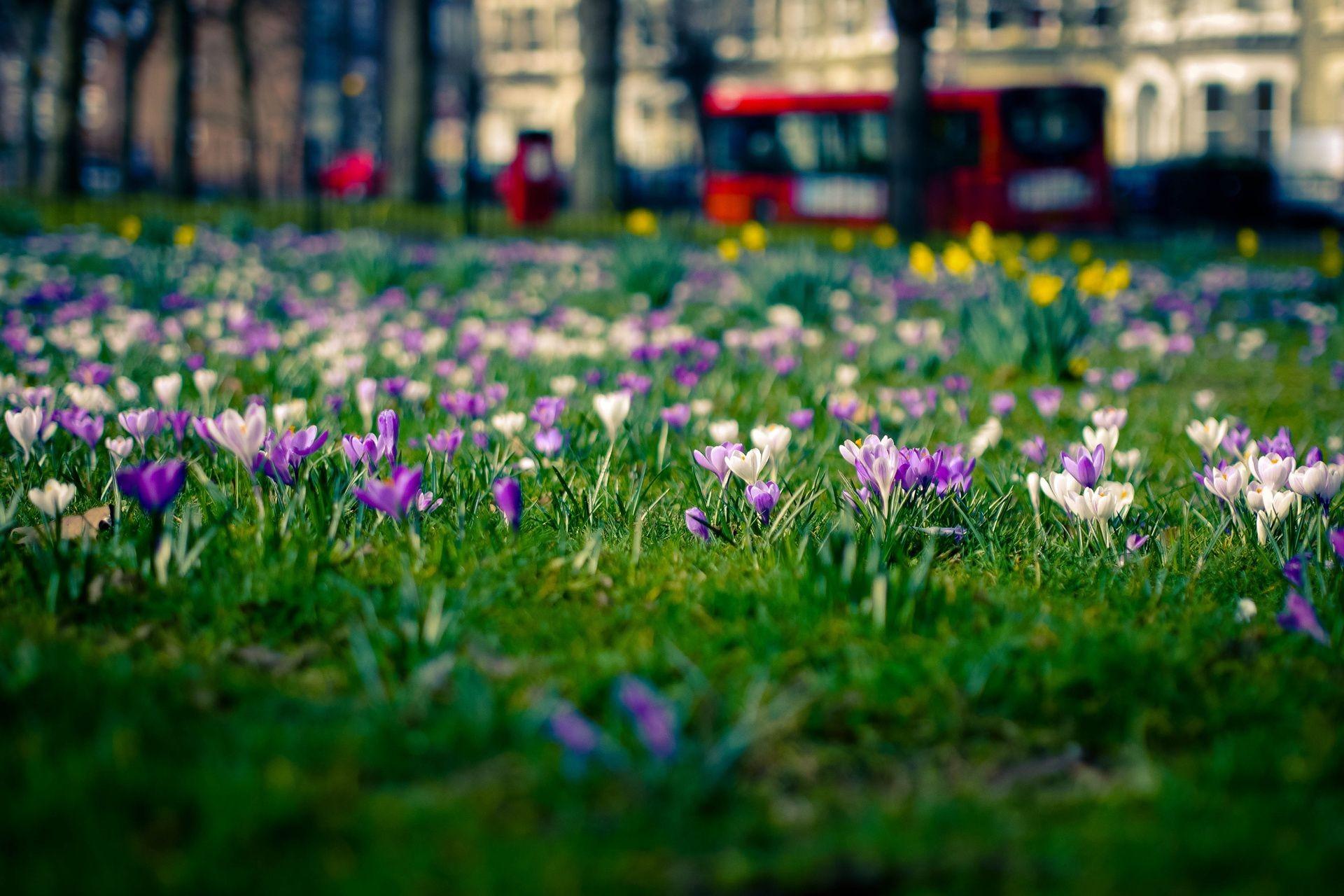 Обои на рабочий стол весна город