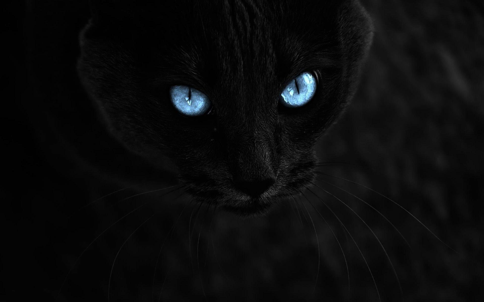 обои на рабочий стол черные кошки на черном фоне № 154850 без смс
