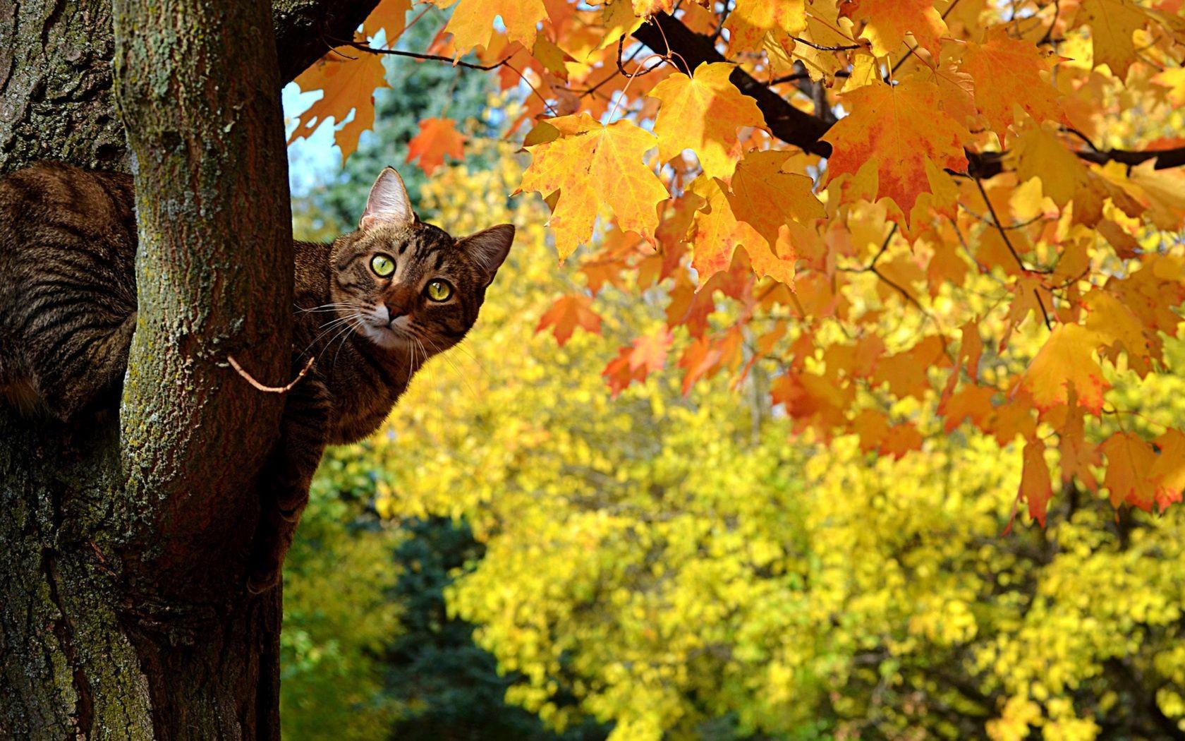 Картинки вертикально осень