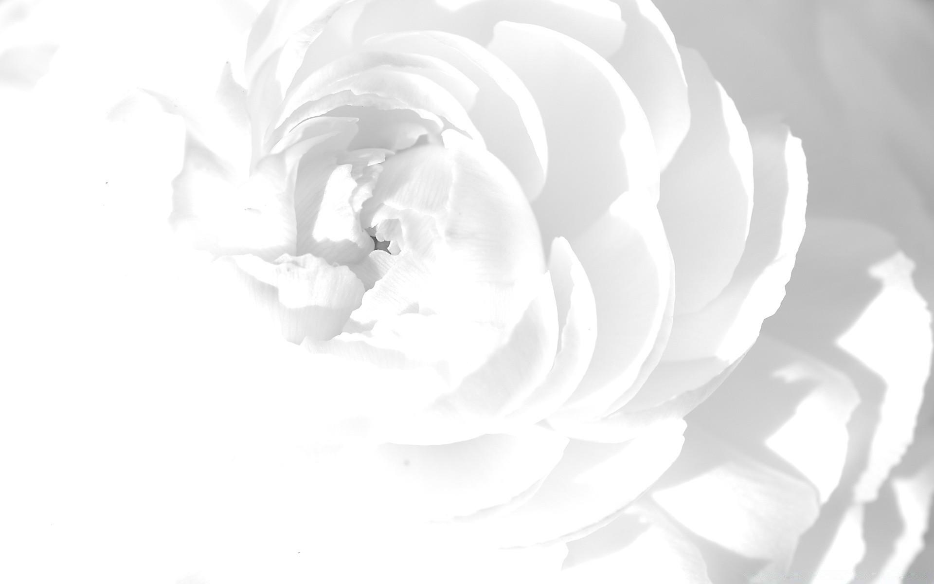 Картинки на рабочий стол в белом цвете