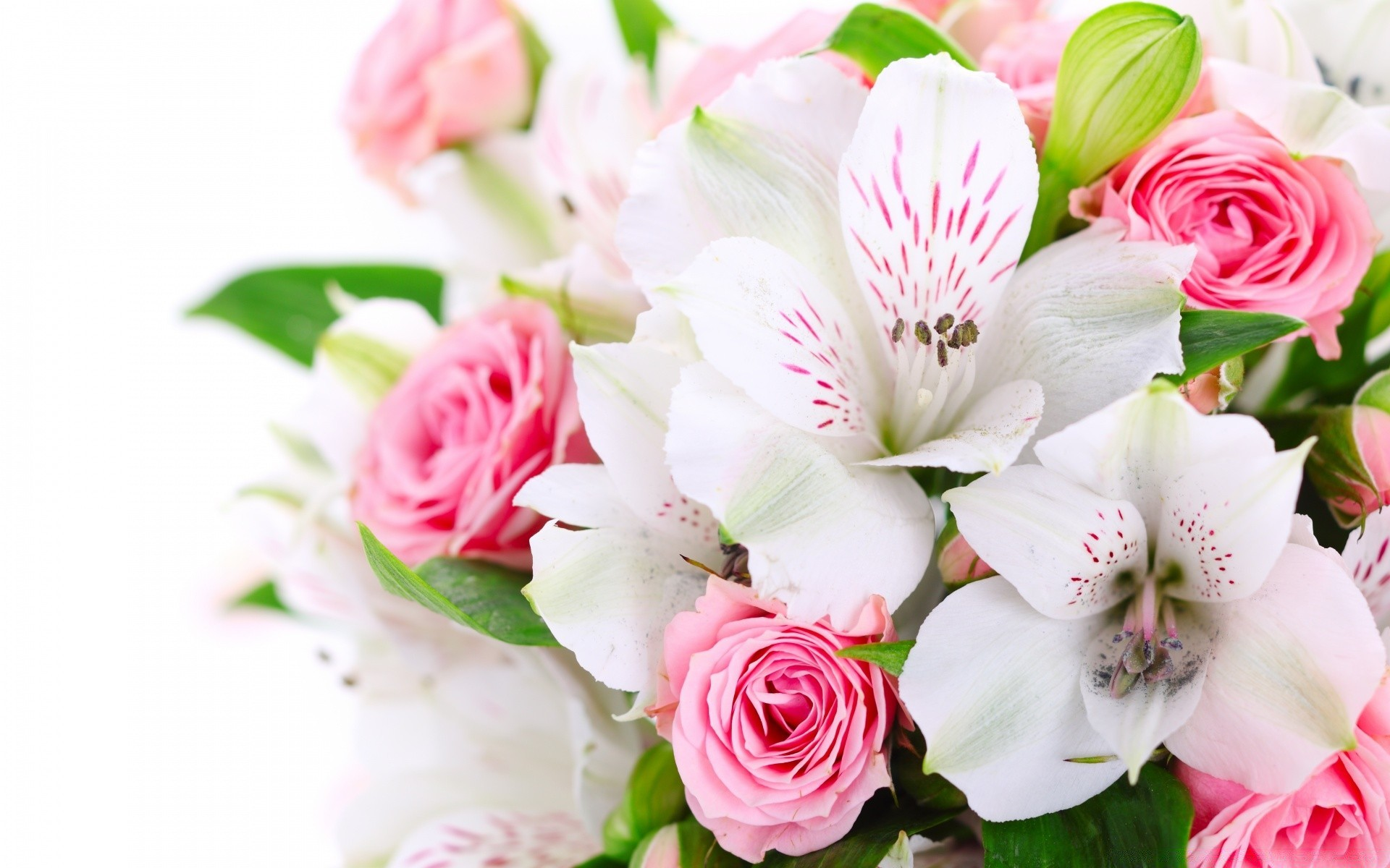 еще красивые картинки с цветы будешь наблюдать ними