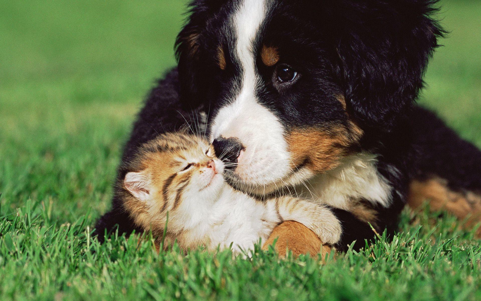 Картинка с собакой и котом, люблю тебя