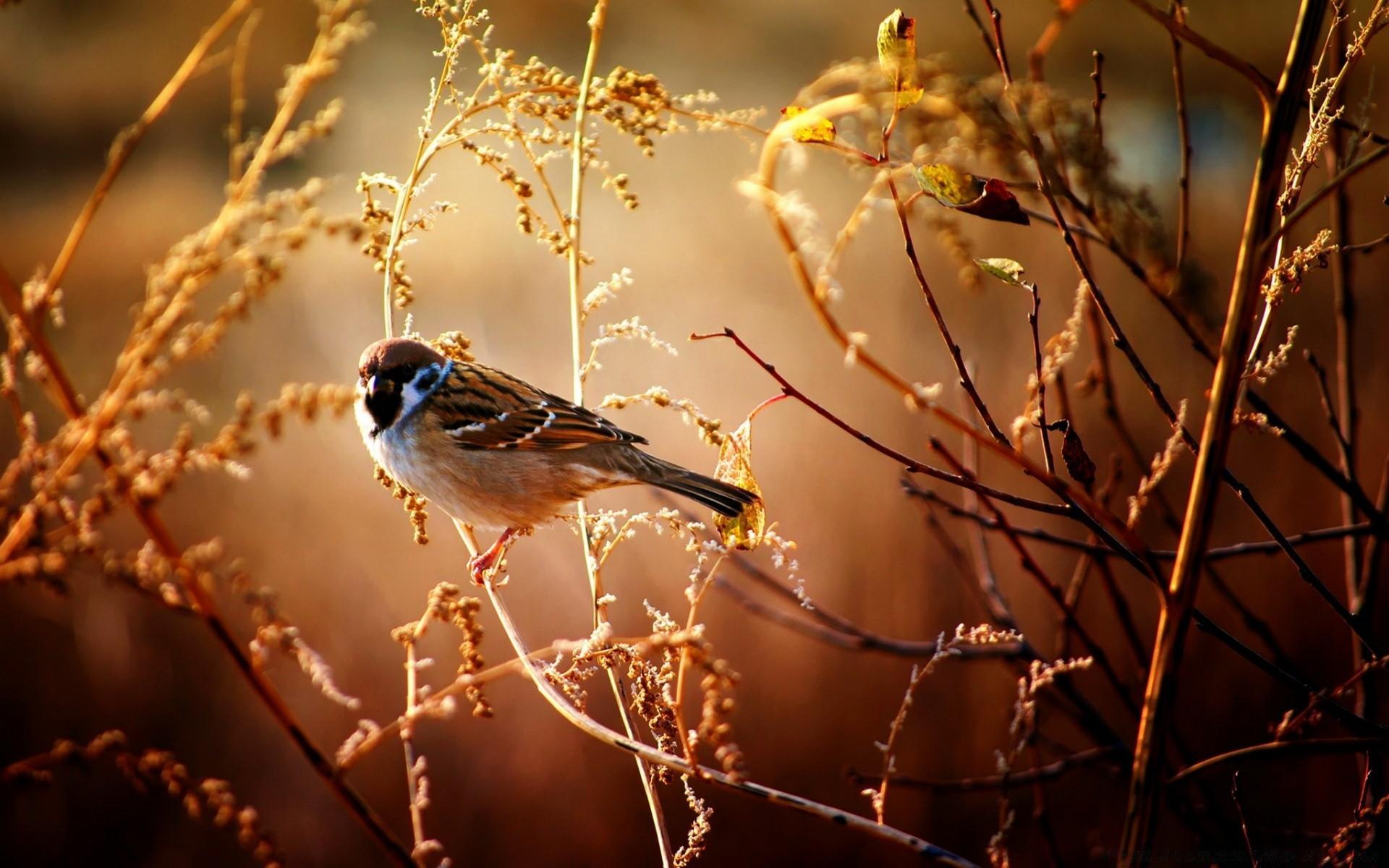 Широкоформатные картинки птицы