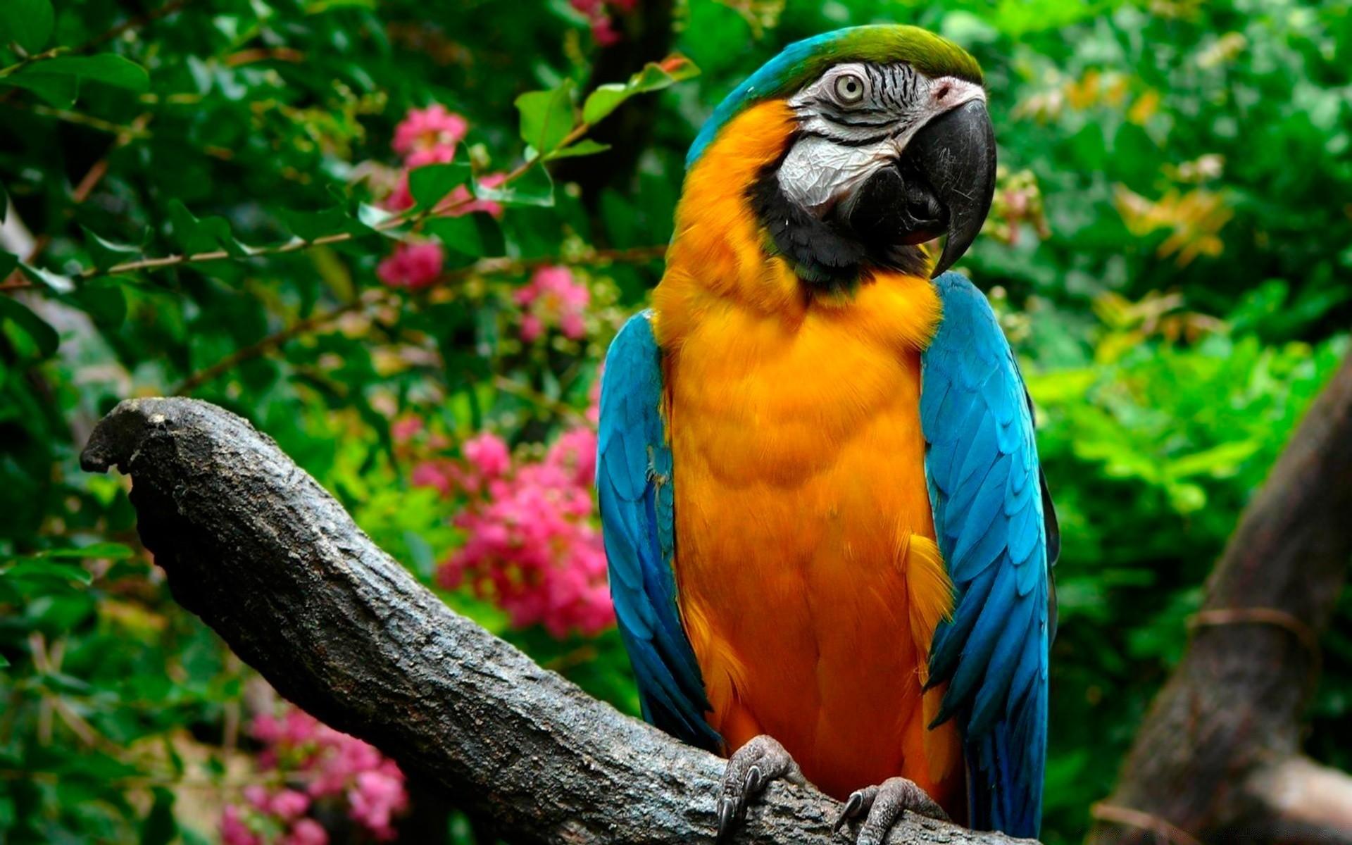 Картинки животные и птици