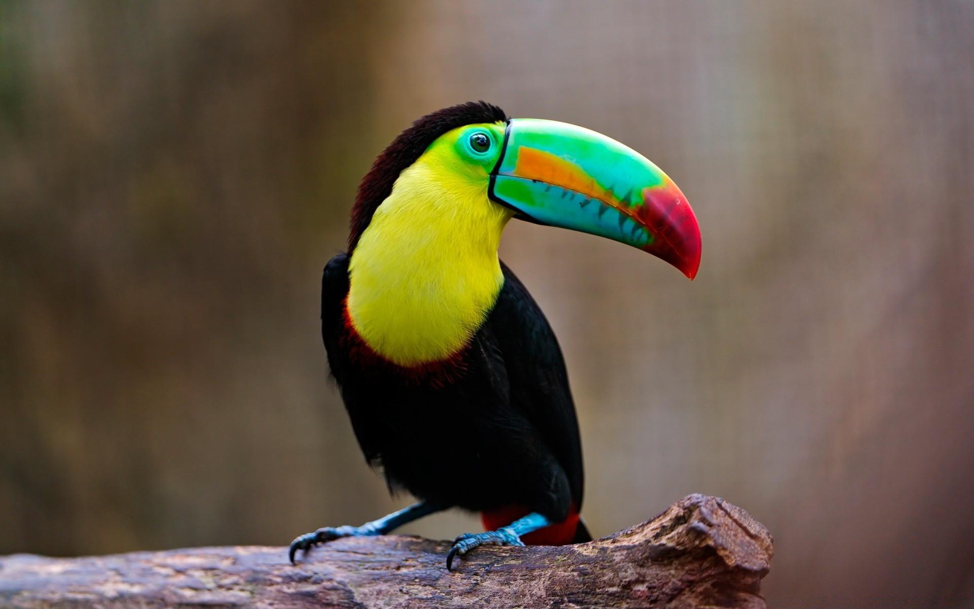Картинки про птицы животные