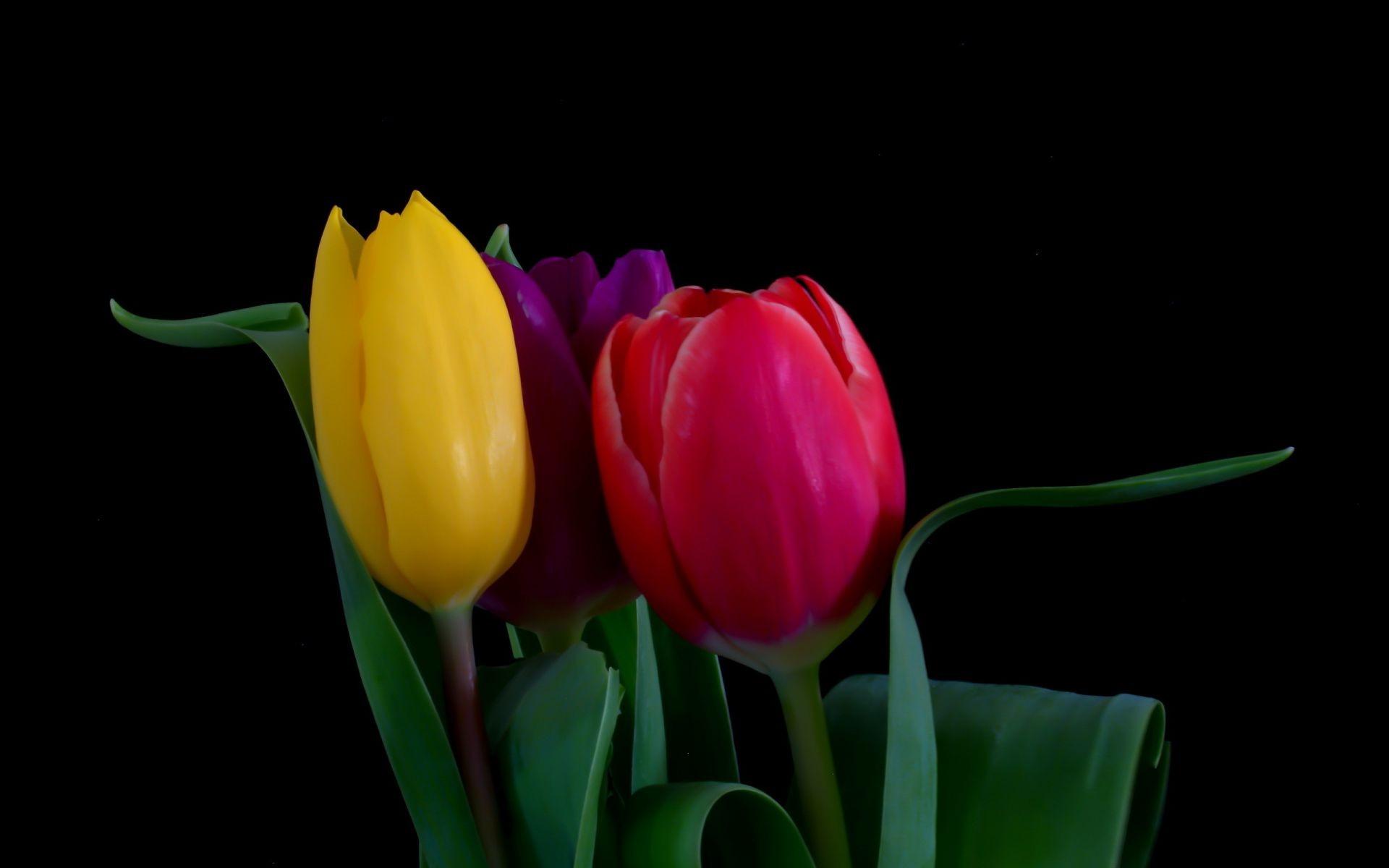 этой подборке фото цветов на черном фоне высокого качества заповедника