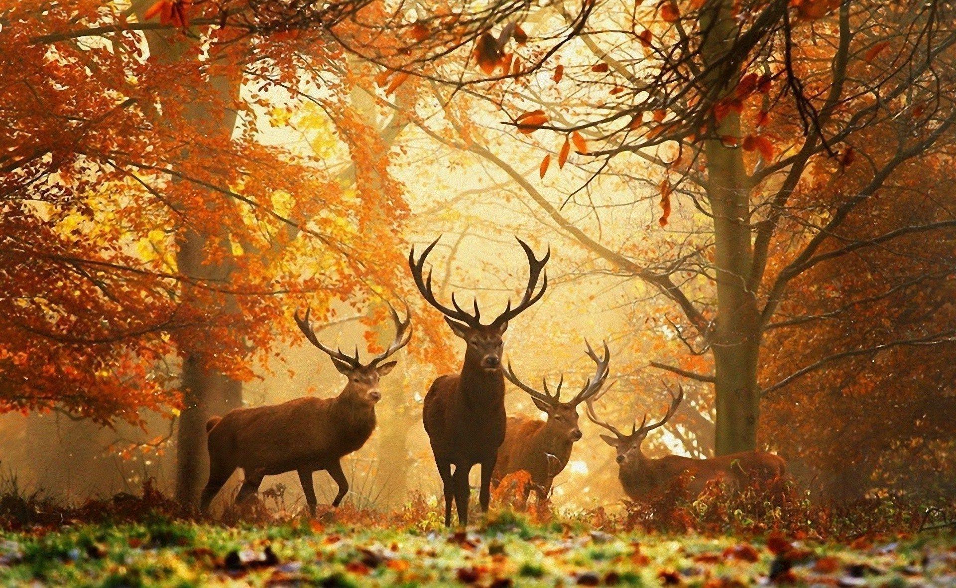 природа лес олень животное деревья бесплатно