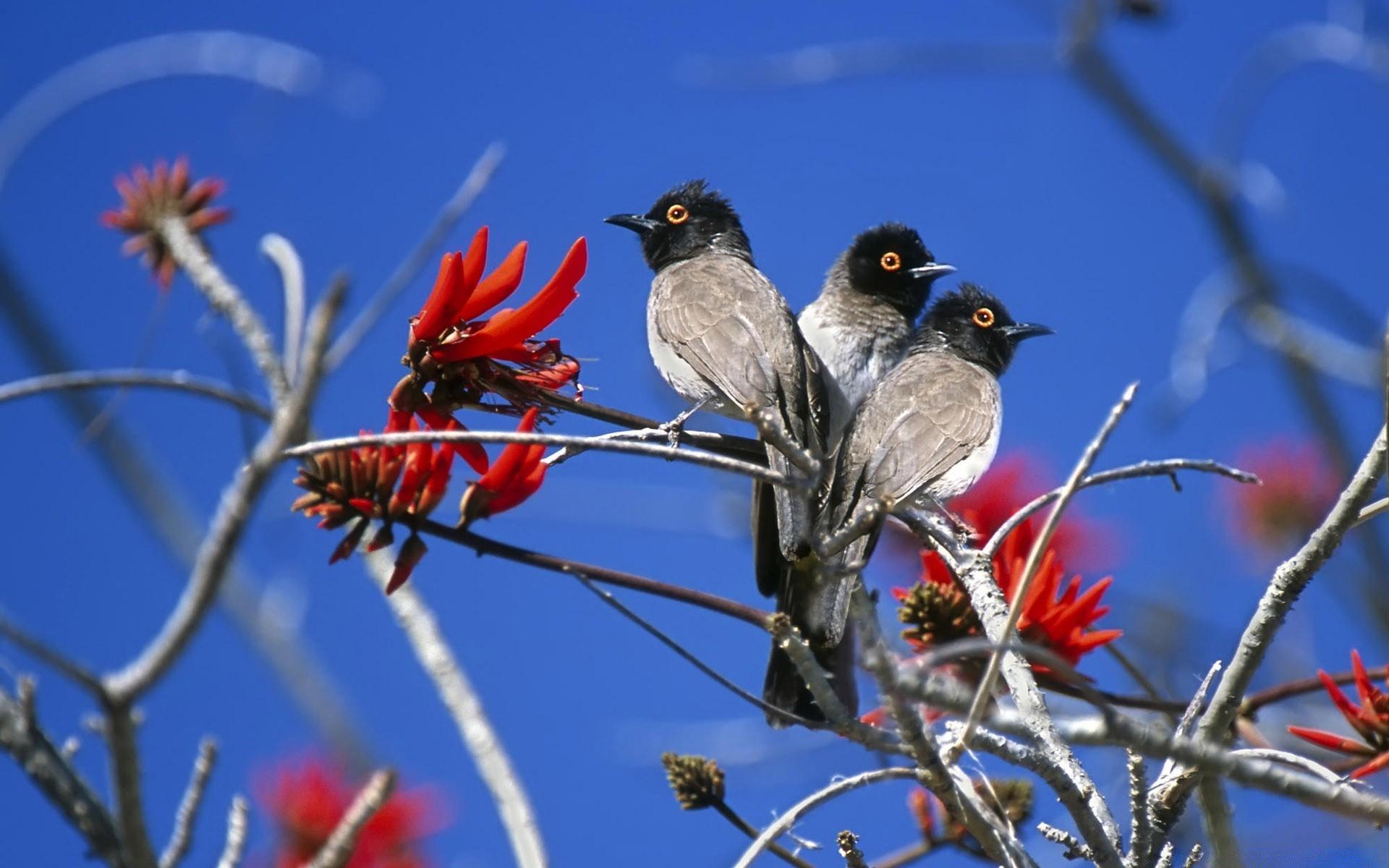 размерами картинки на рабочий стол с птицами убирает