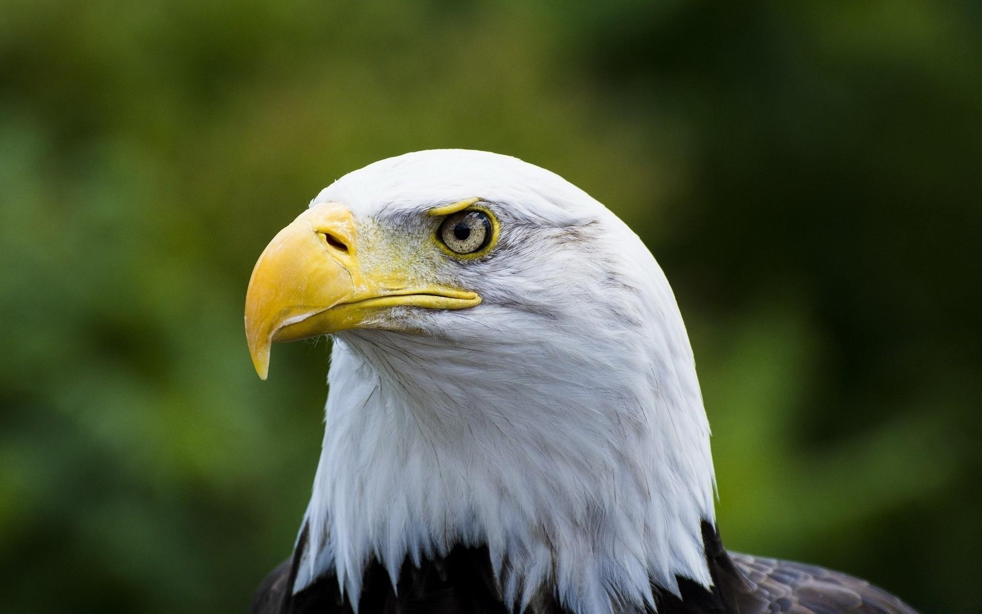белый орел фото животные немного отпустила процедура