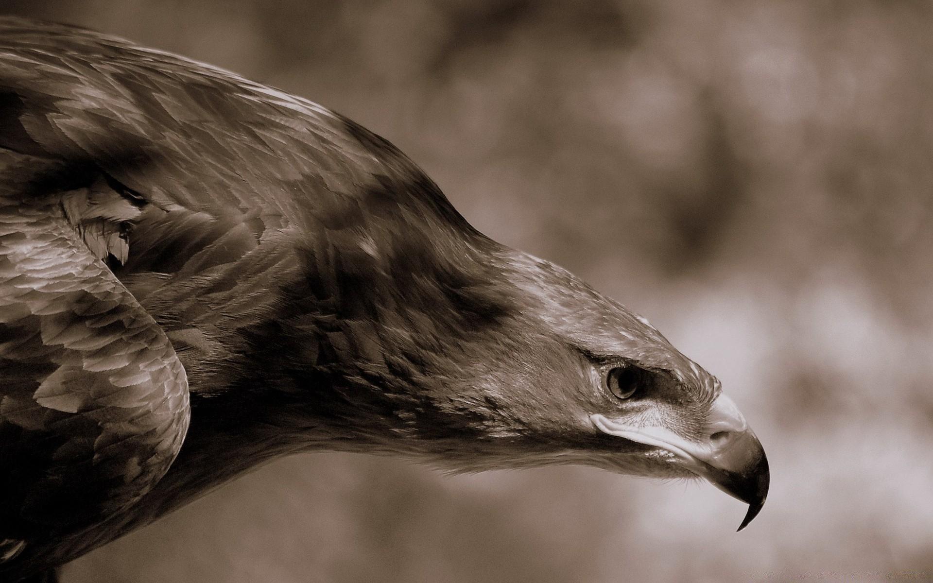 небогатой картинки на аву животных и птицы данном
