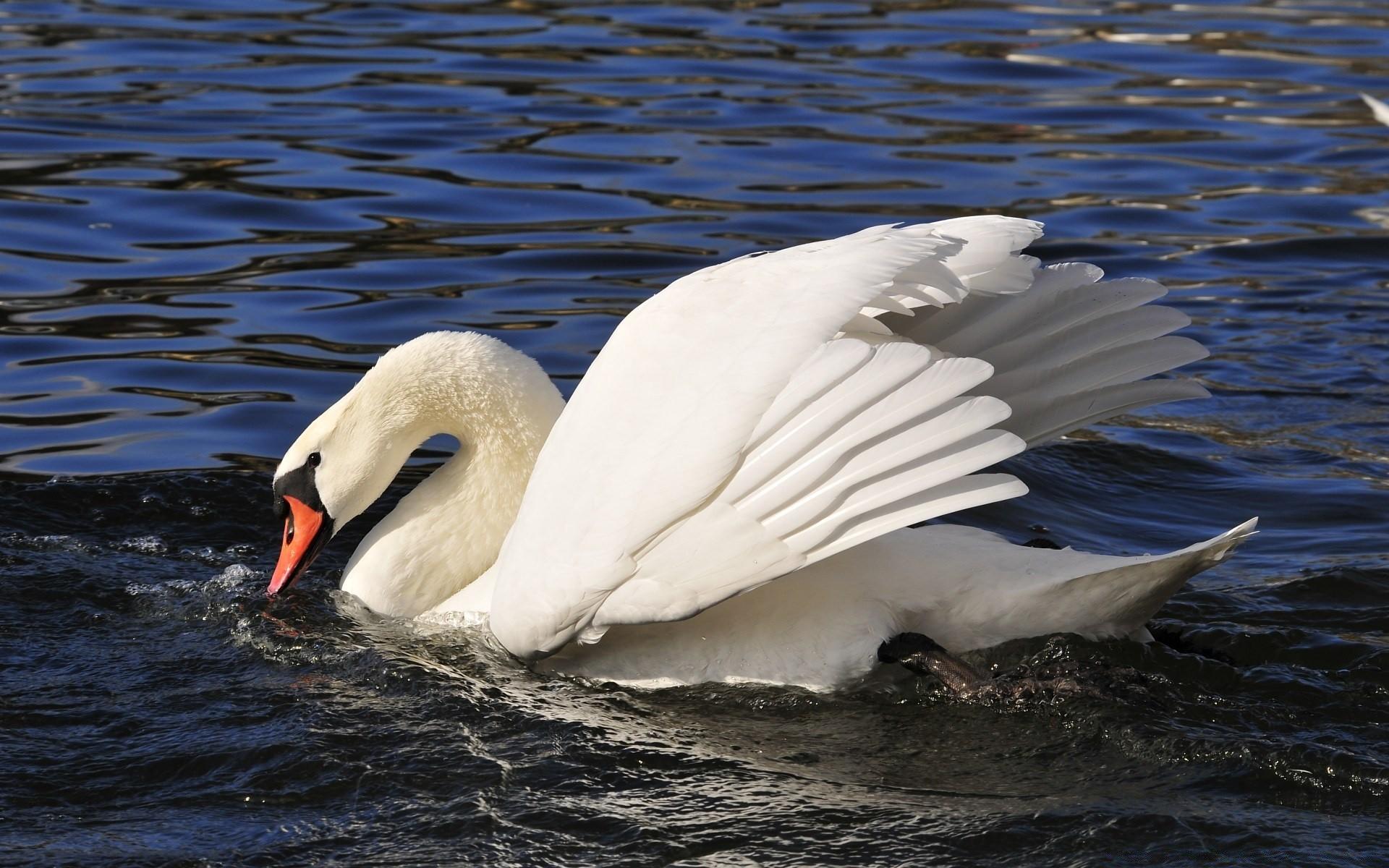 Картинки природы животных и птиц, новогодних