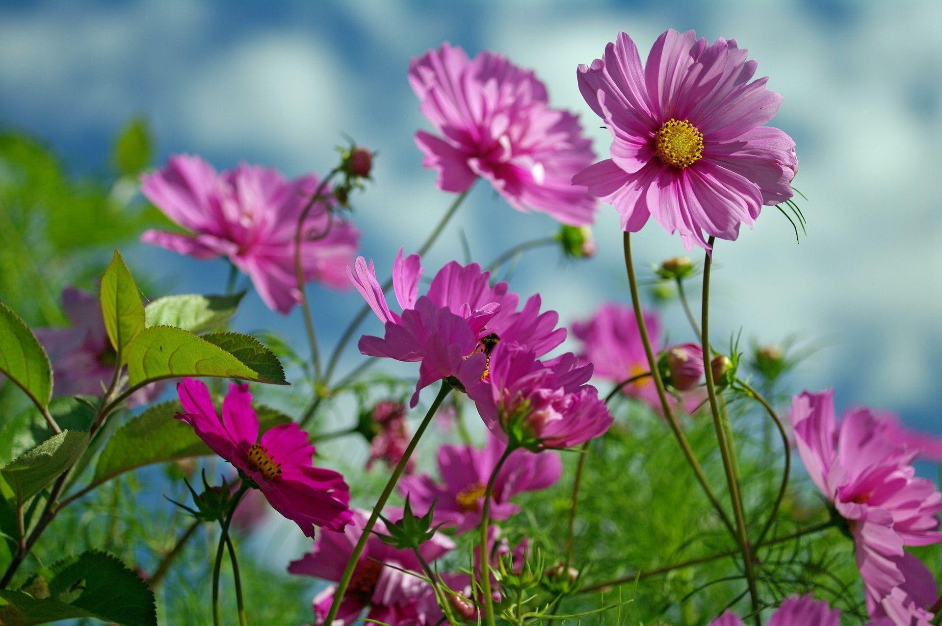 Обои на рабочий стол цветы лето