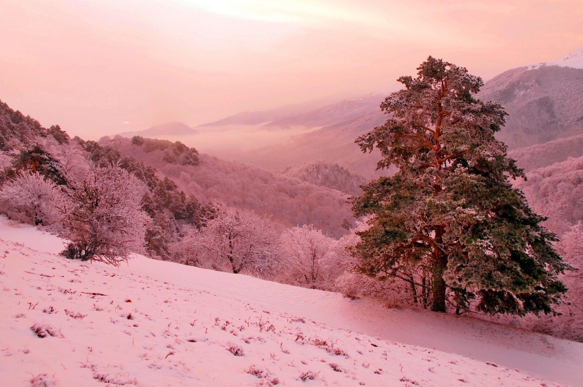 Деревья на склоне горы загрузить