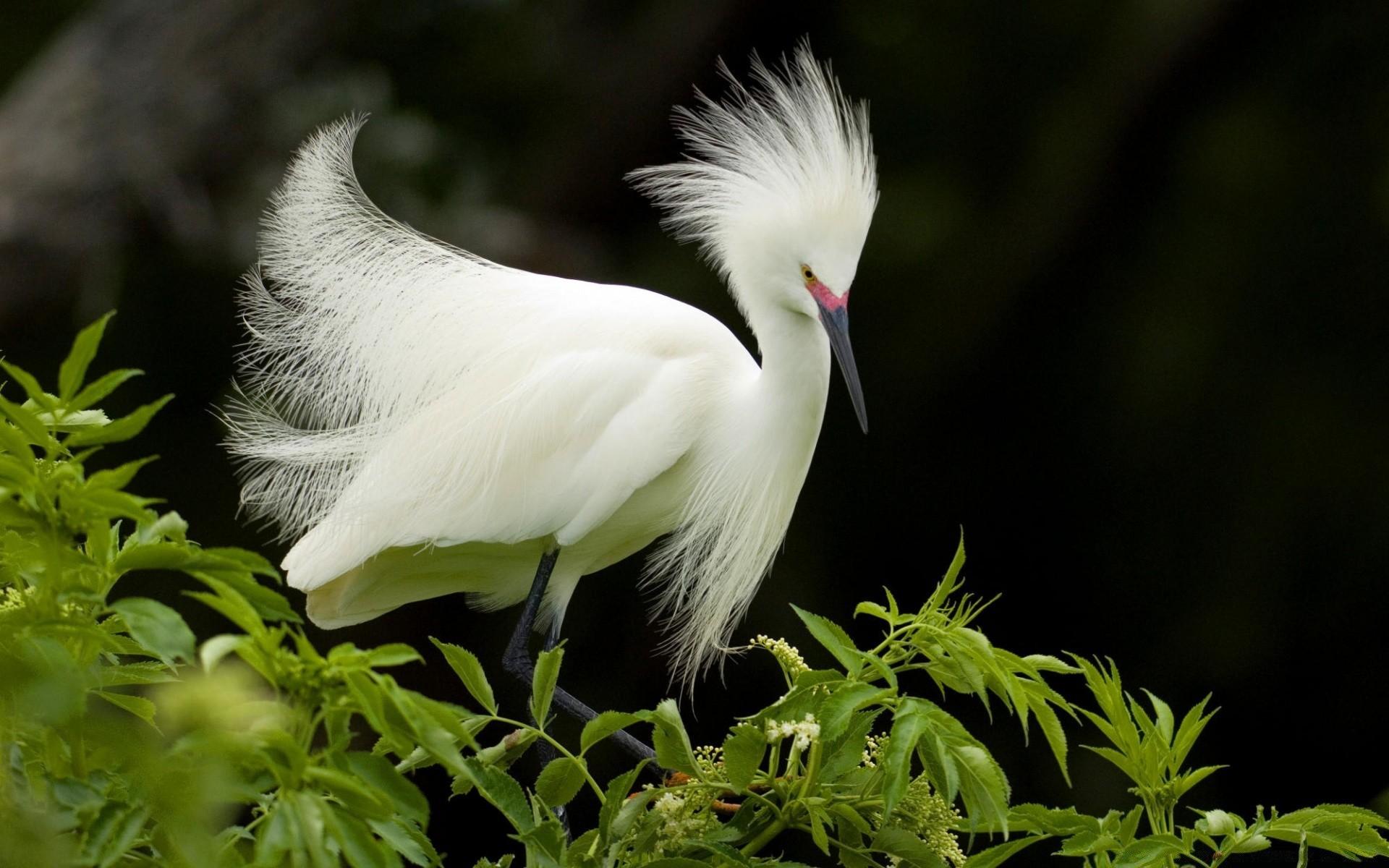 Поздравление днем, картинки красивых животных и птиц
