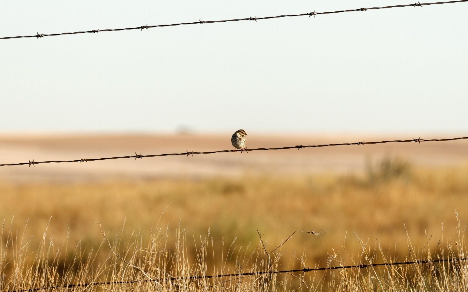 колючий забор без смс