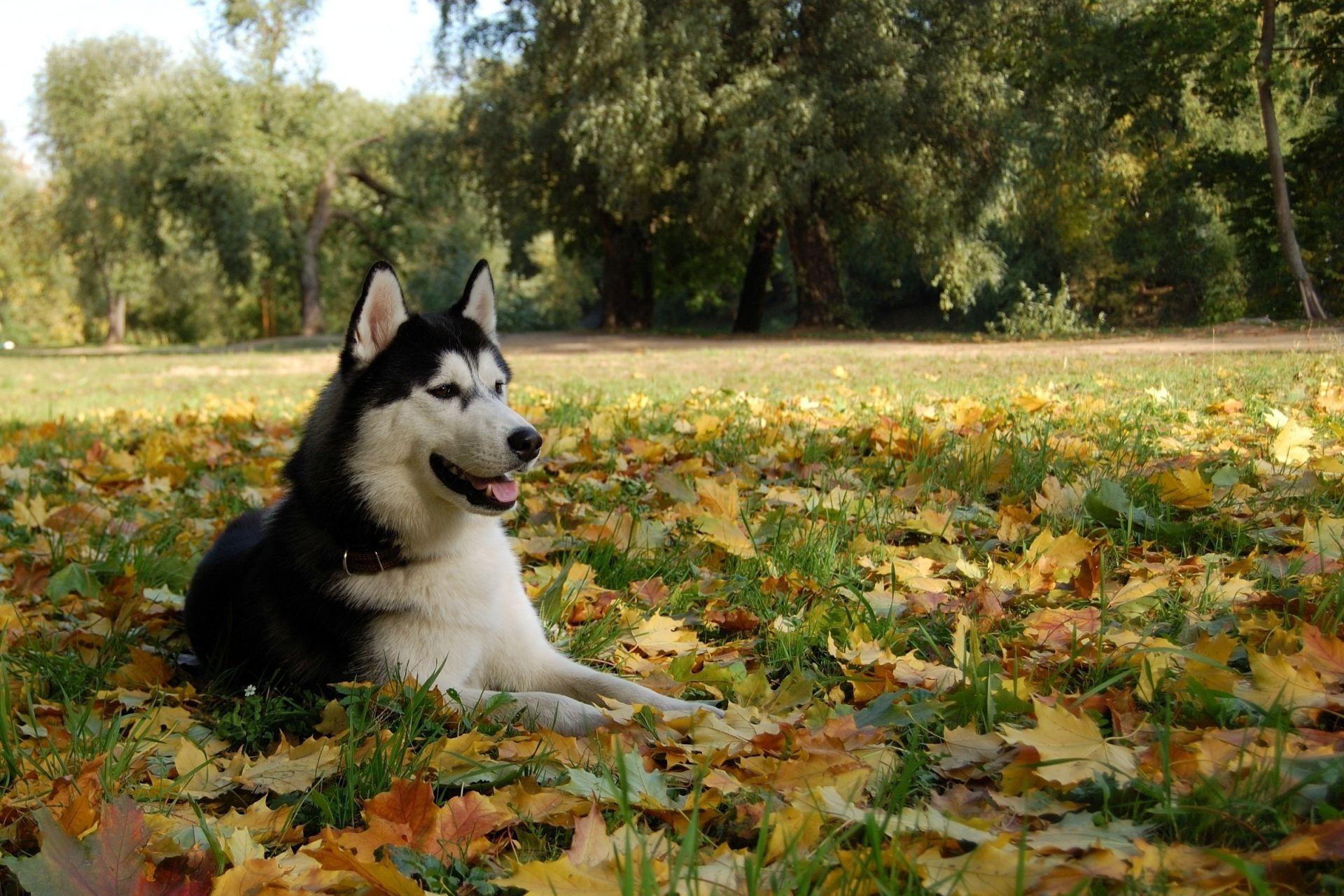 природа животные собака голова без смс