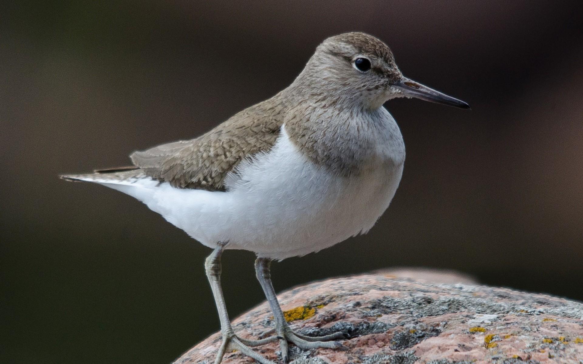 фото и названия птиц с длинным клювом большое