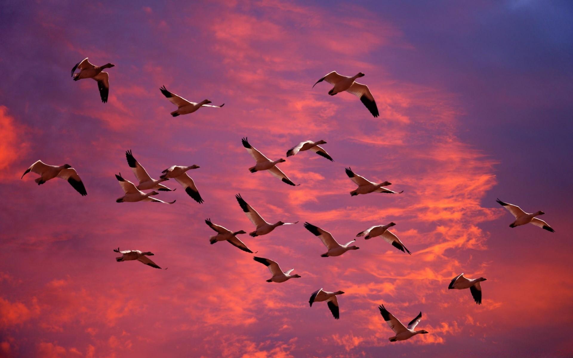 нужно для картинки осень стаи птиц вертикальные рисуете прозрачные