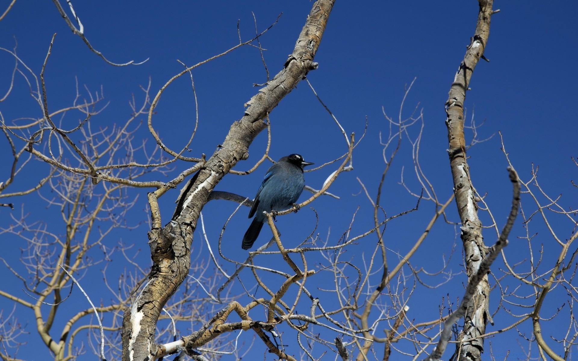 картинки птицы на ветвях видели такие