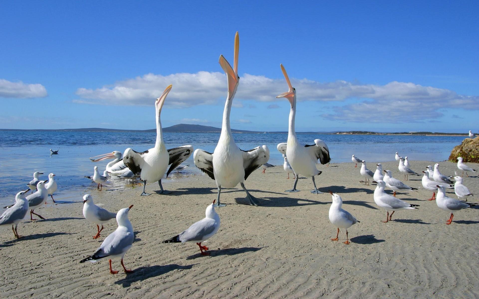 Чайка на песке без смс