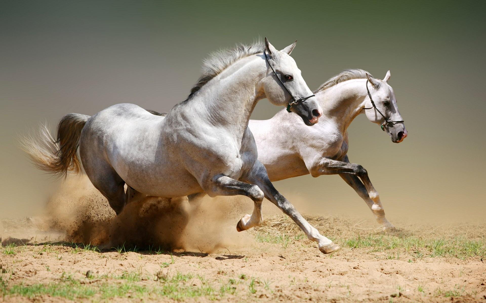 Картинки для рабочего стола-лошадь