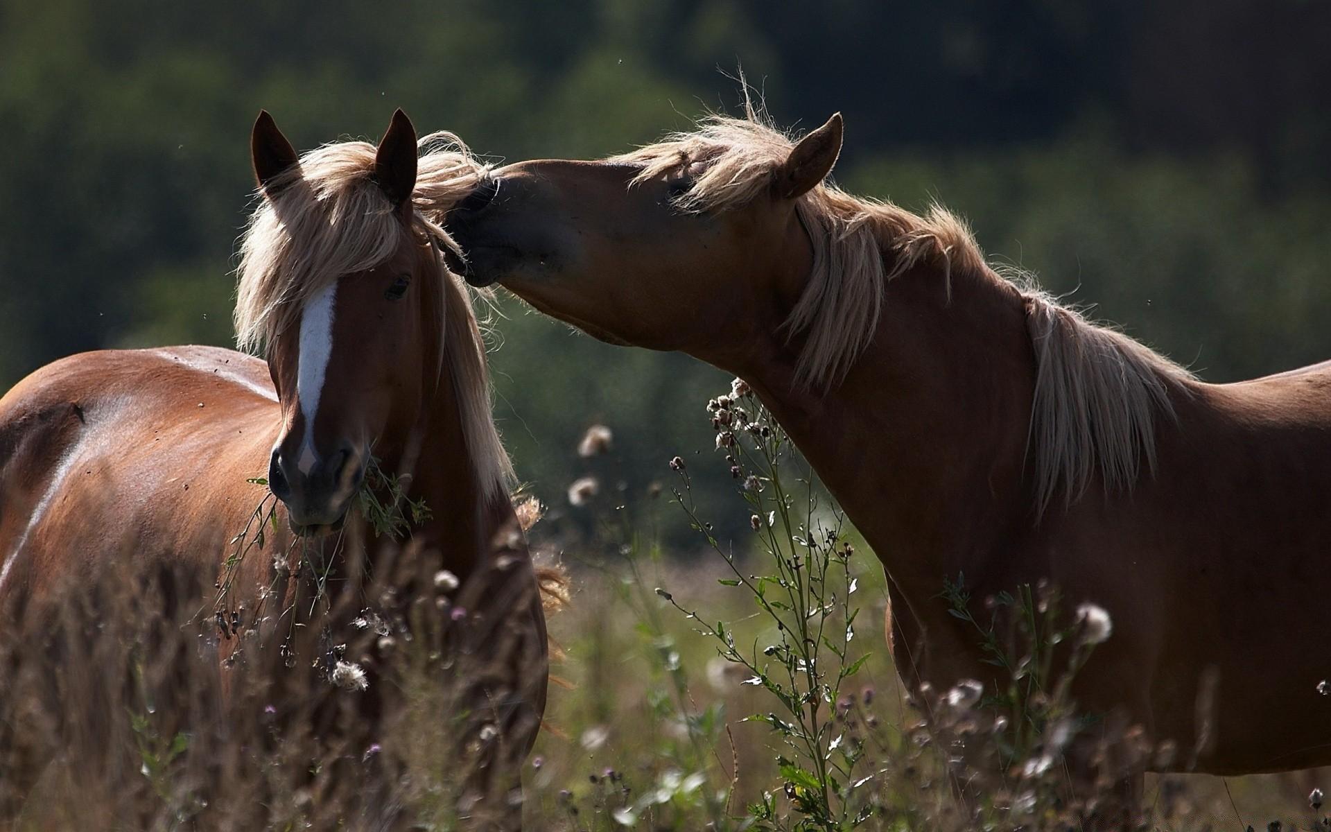 Картинки красивые про природу с животными, про стукача приколом