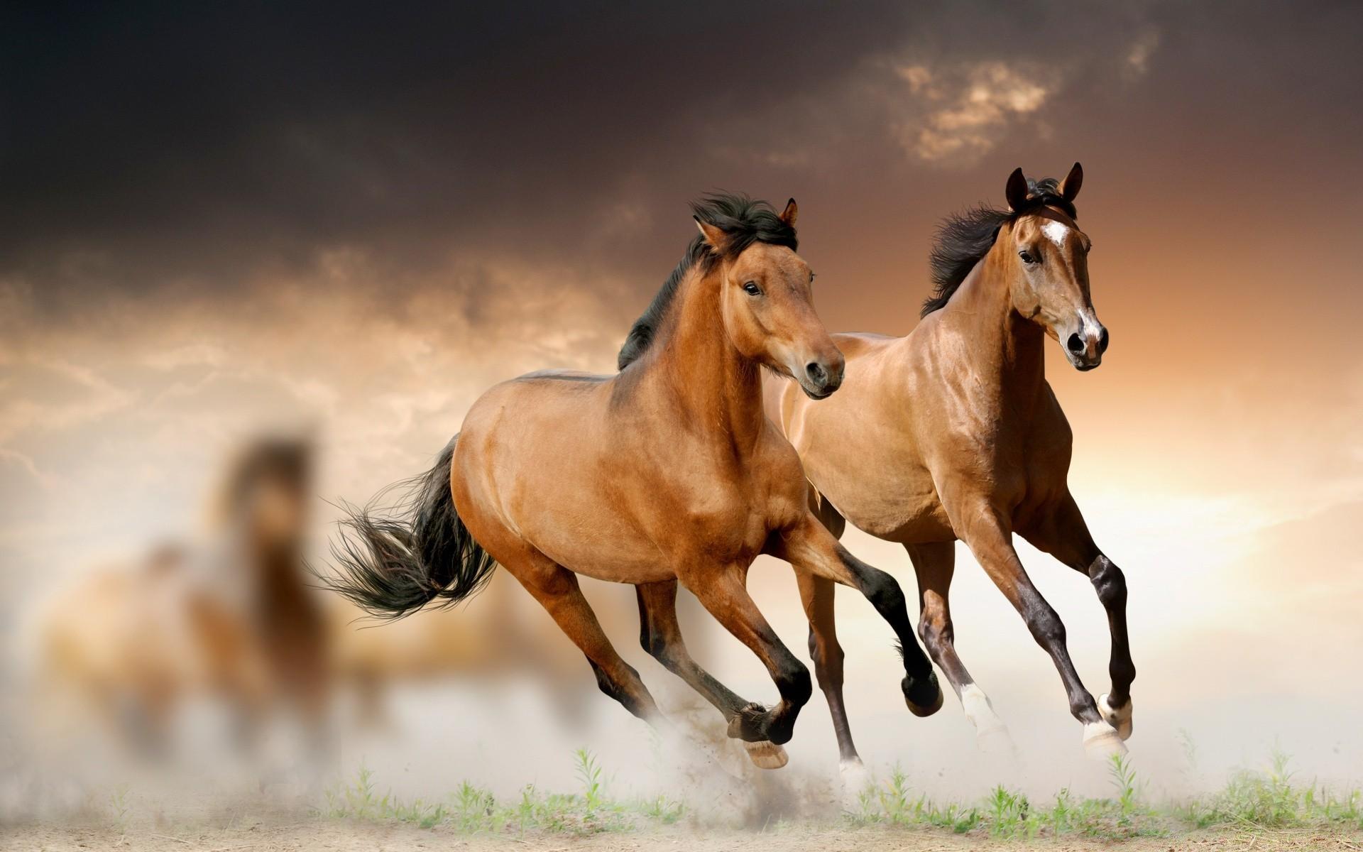 Картинки с лошадьми на рабочий стол во весь экран