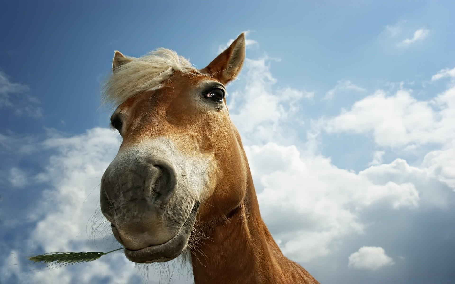 Картинки про коней смешные, днем