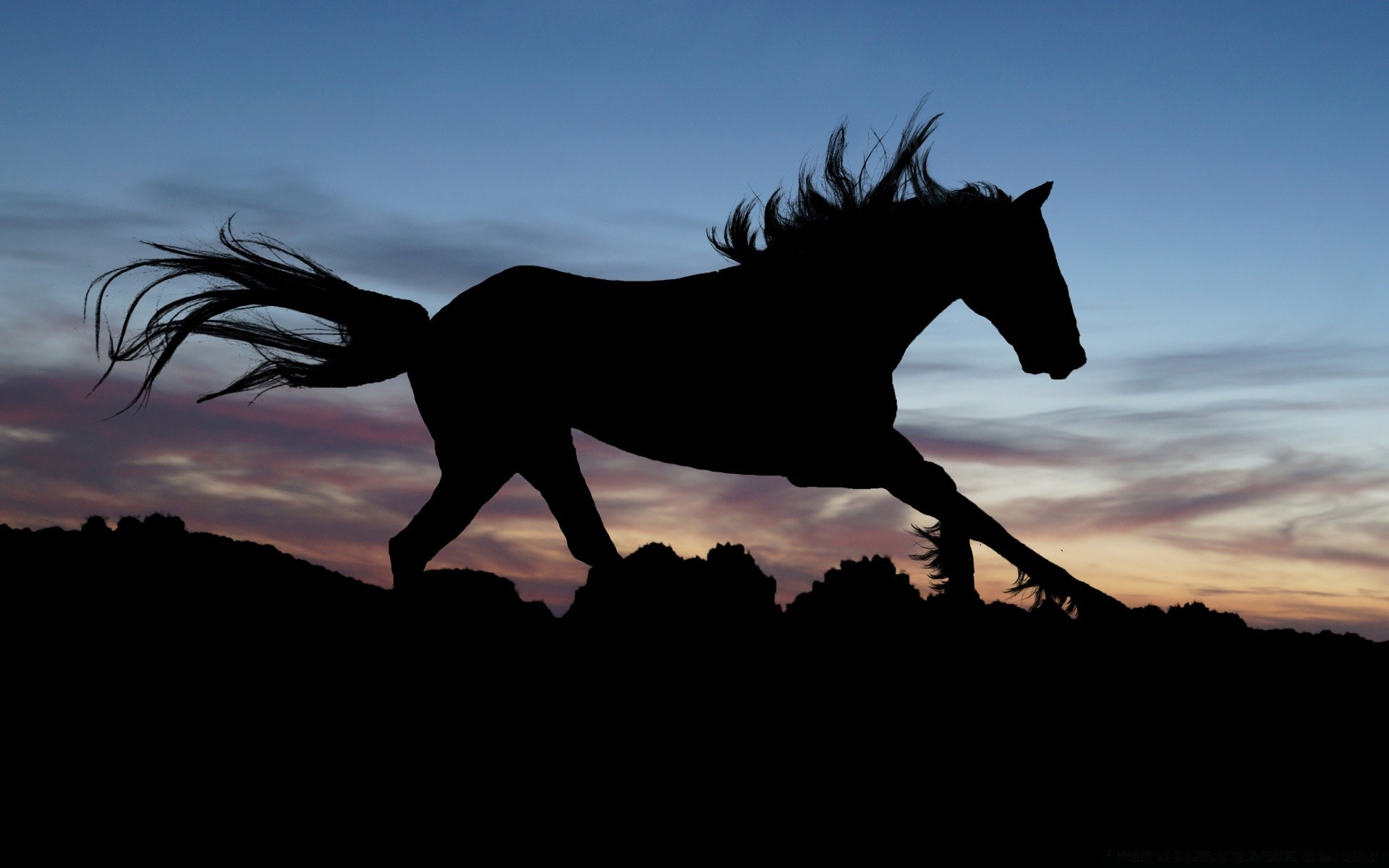 лошади тени ночь  № 359472 без смс