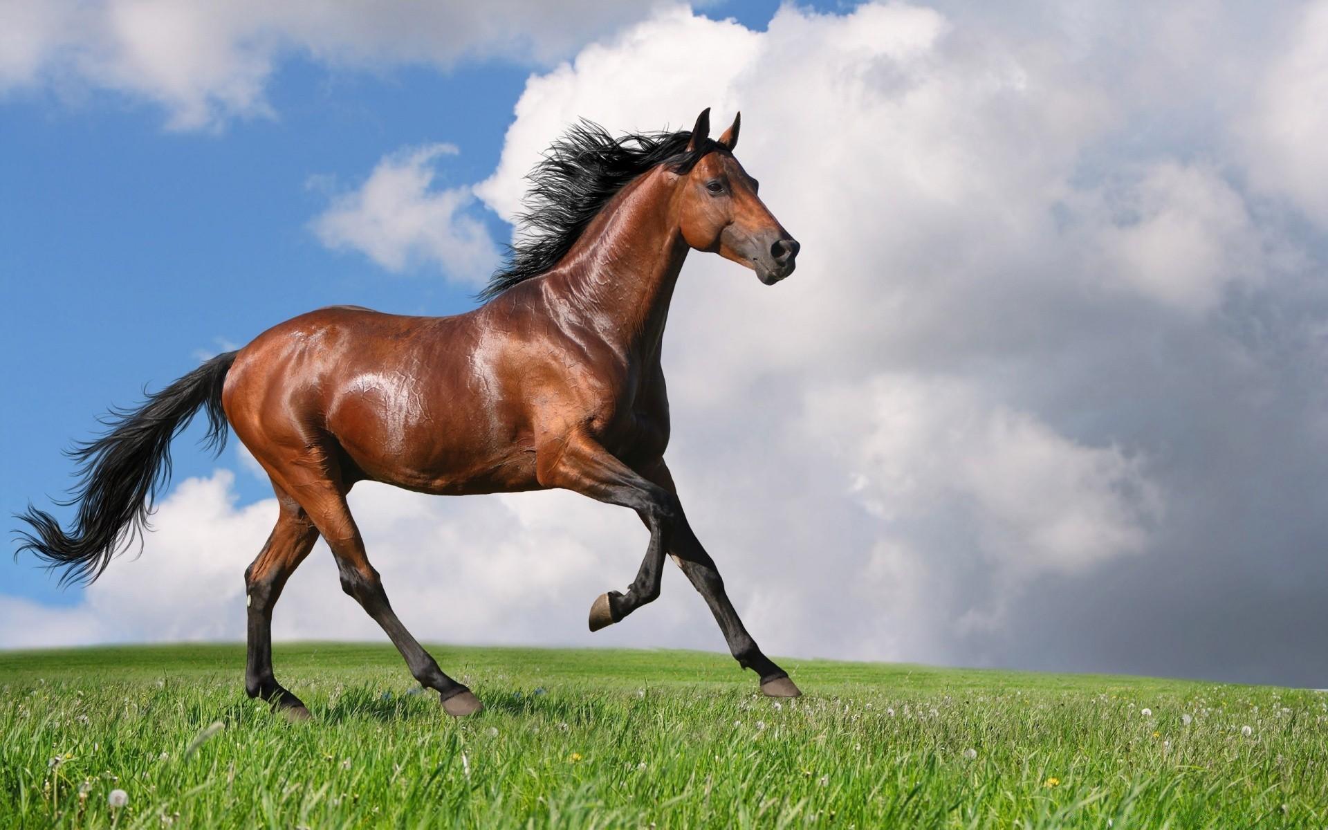Лошадь обои на телефон бокам